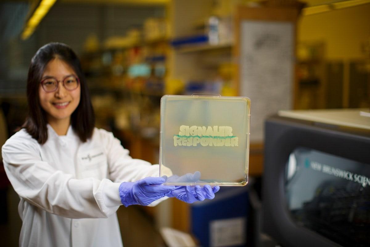 Биологи научили генно-модифицированные кишечные бактерии общаться друг с другом