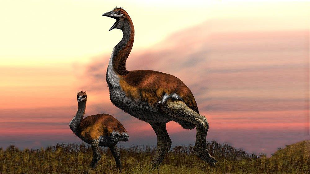 Определена самая огромная птица в истории