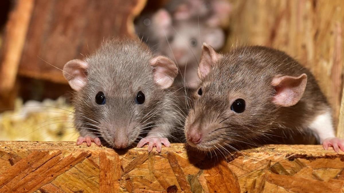 Животные распознают больных сородичей по запаху и защищаются от заражения