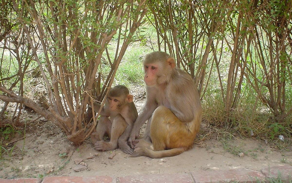 Мозг делающих ставки обезьян рассказал о регуляции рискованного поведения