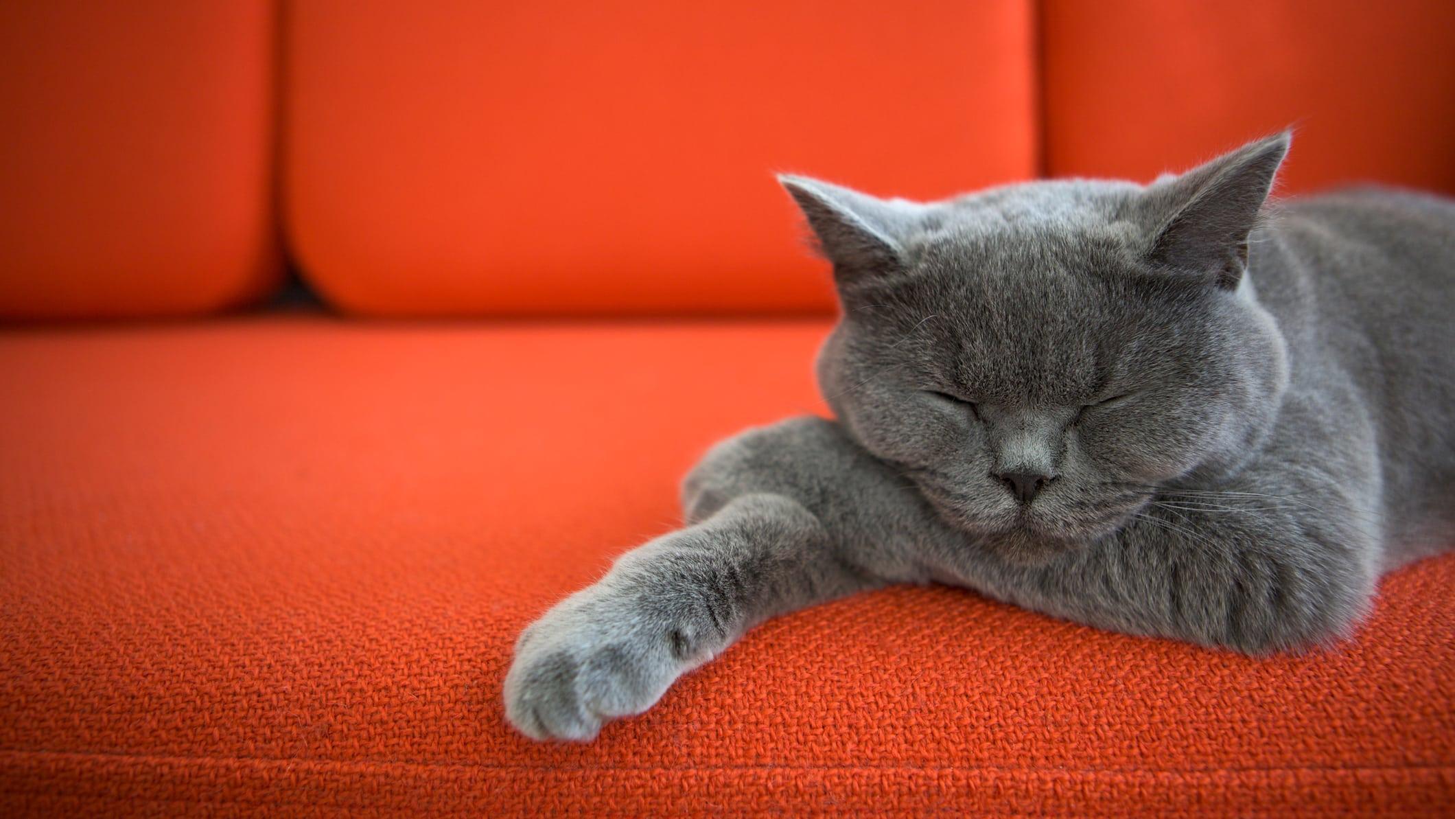 Быстрому сну подобрали два гена