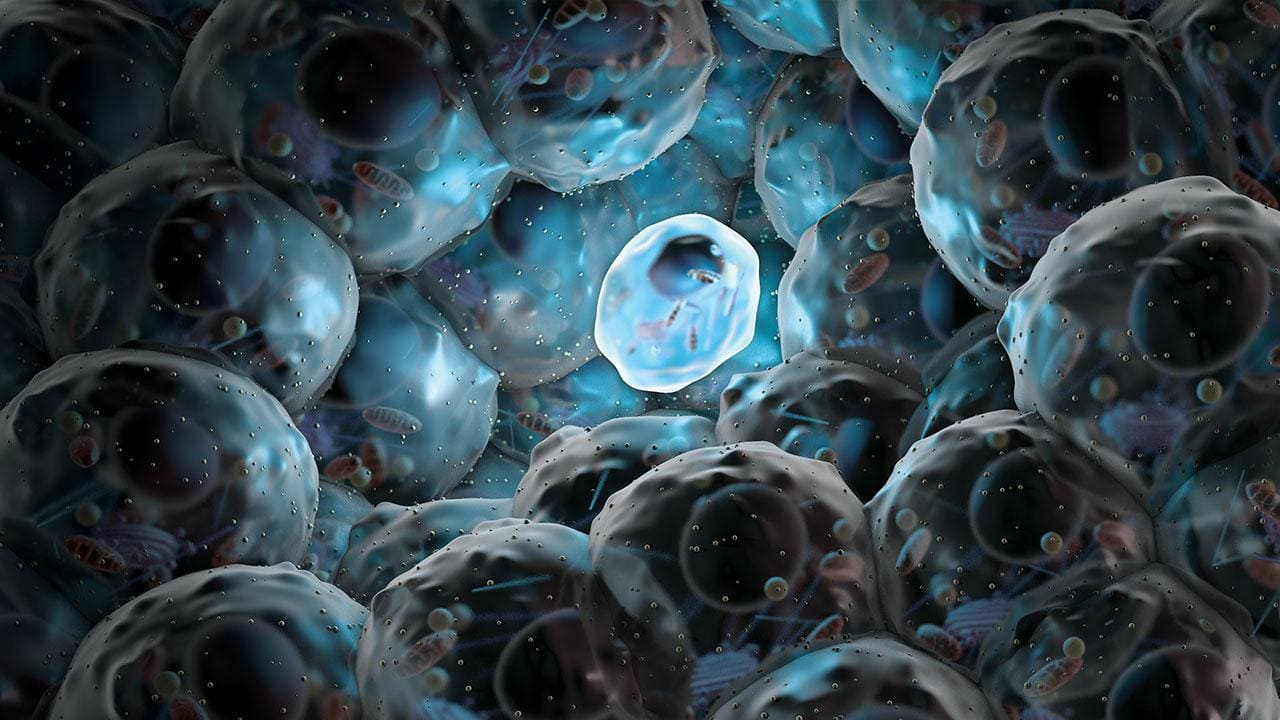 Стволовые клетки человека превратили в предшественники яйцеклеток