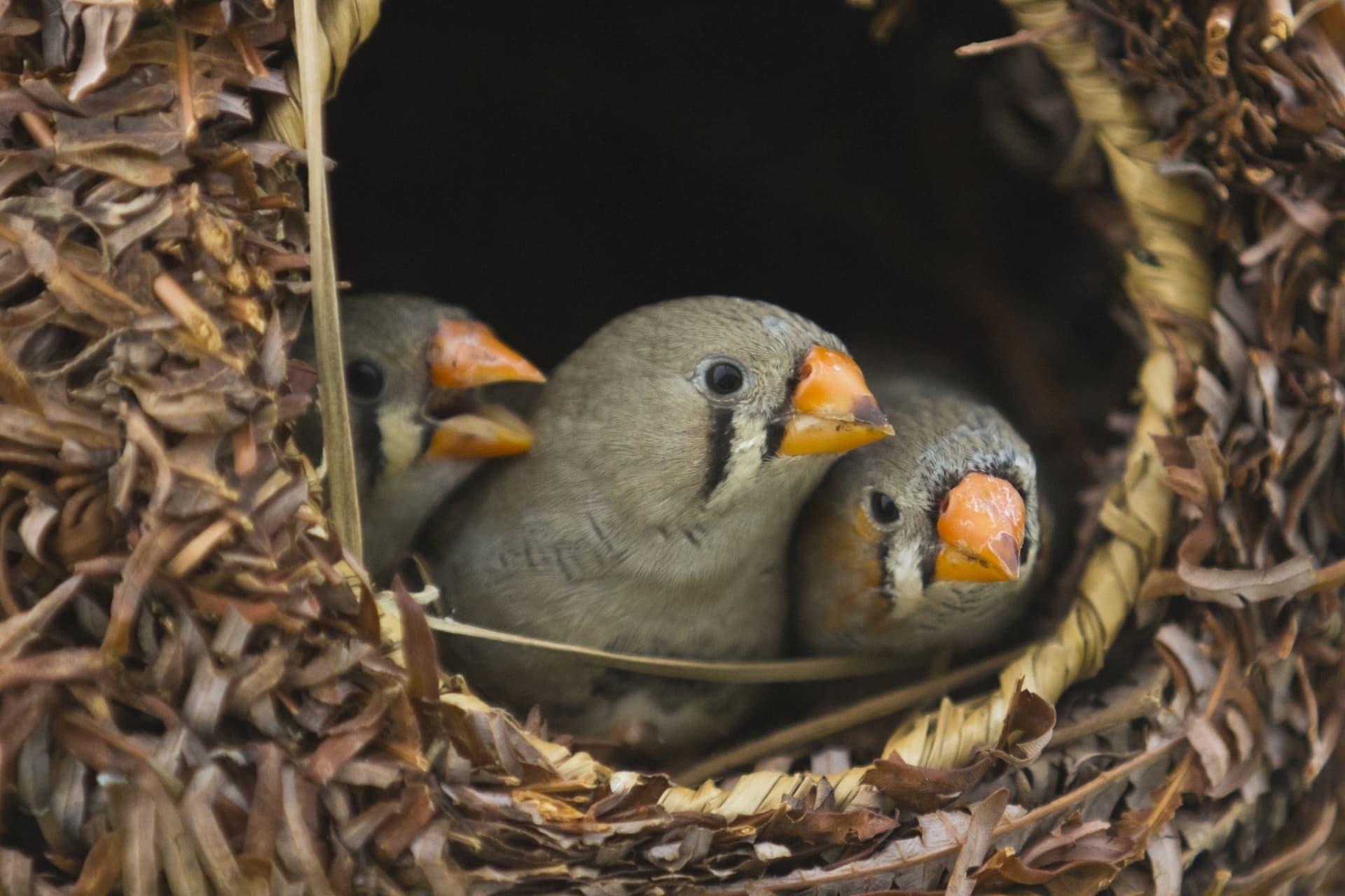 Птицы стареют от шума