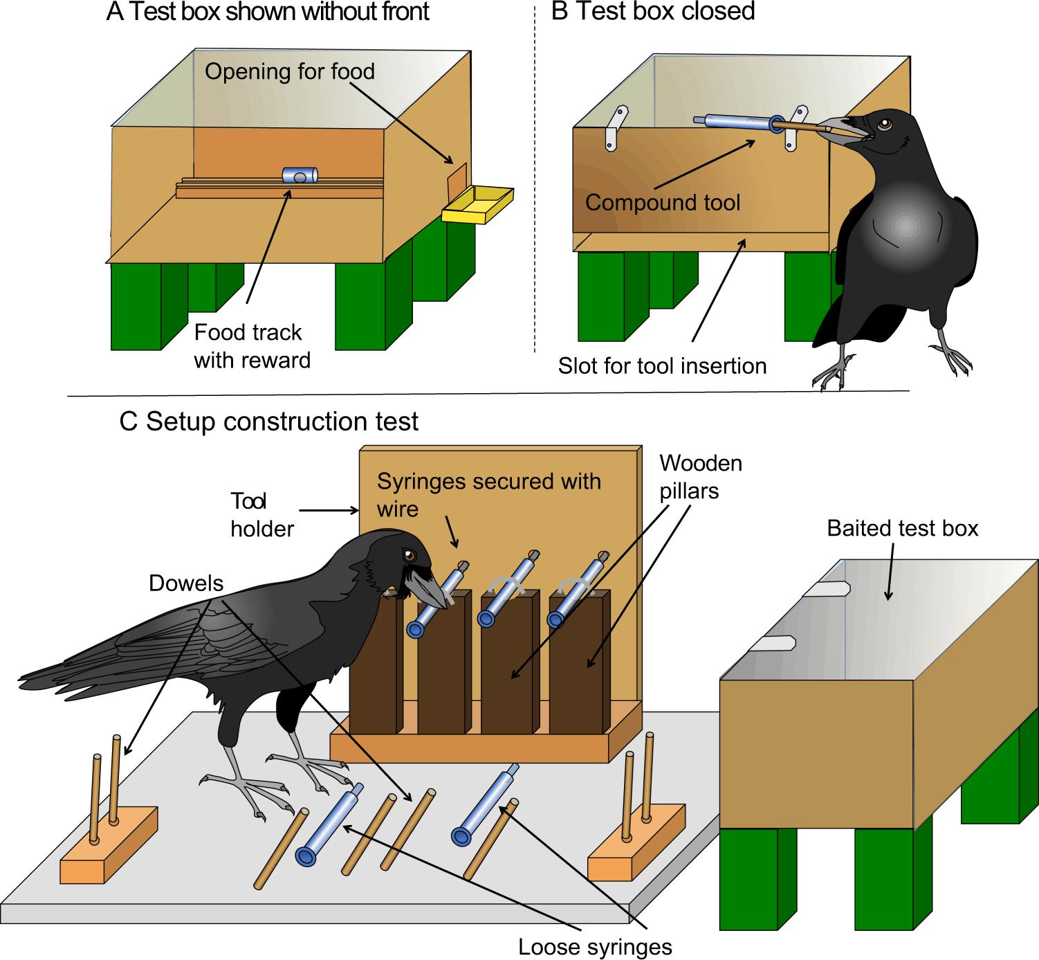 Новокаледонские вороны сами догадались собрать из коротких палочек длинную