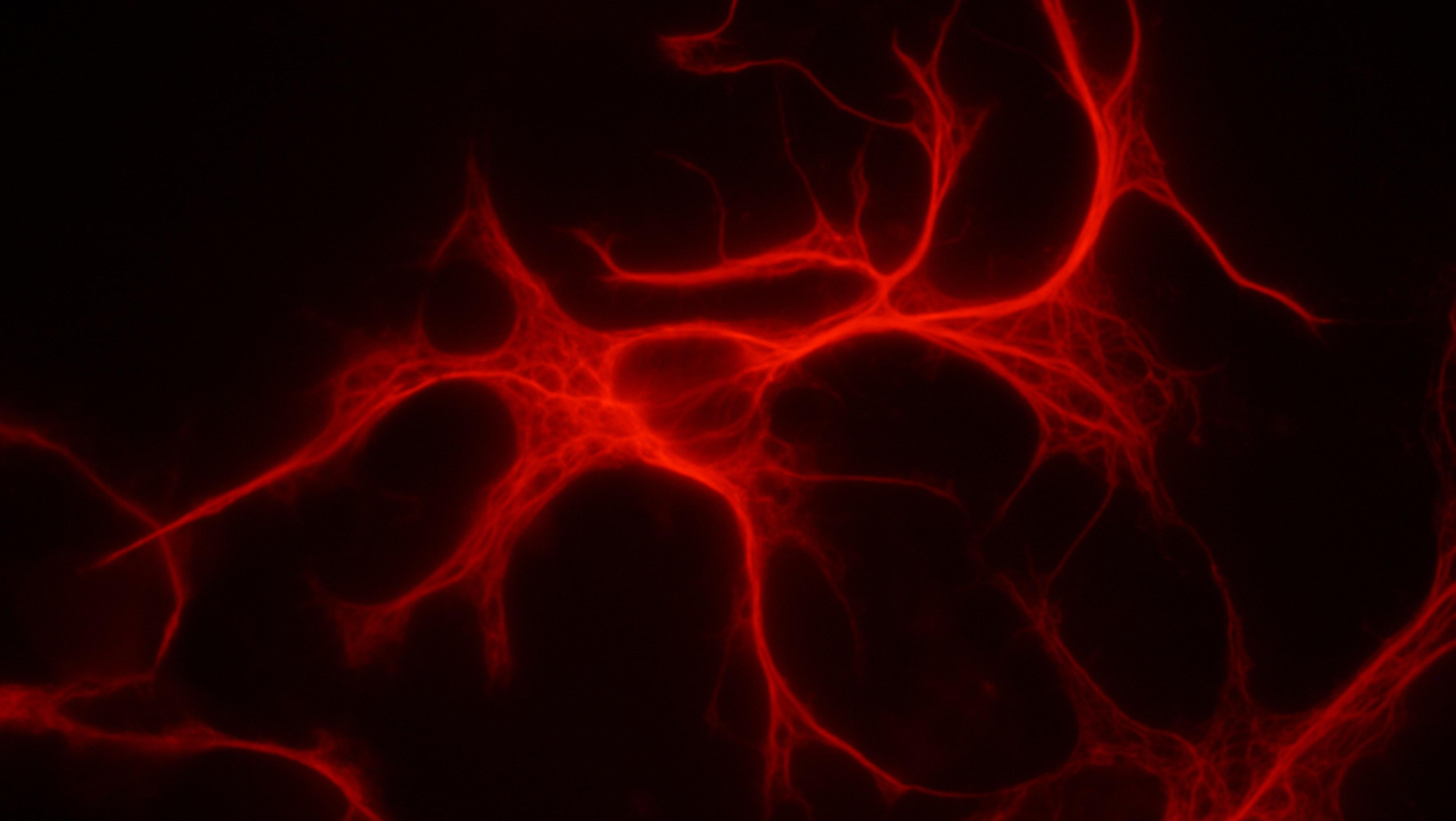Ученые нашли, где в организме ВИЧ скрывается от лечения