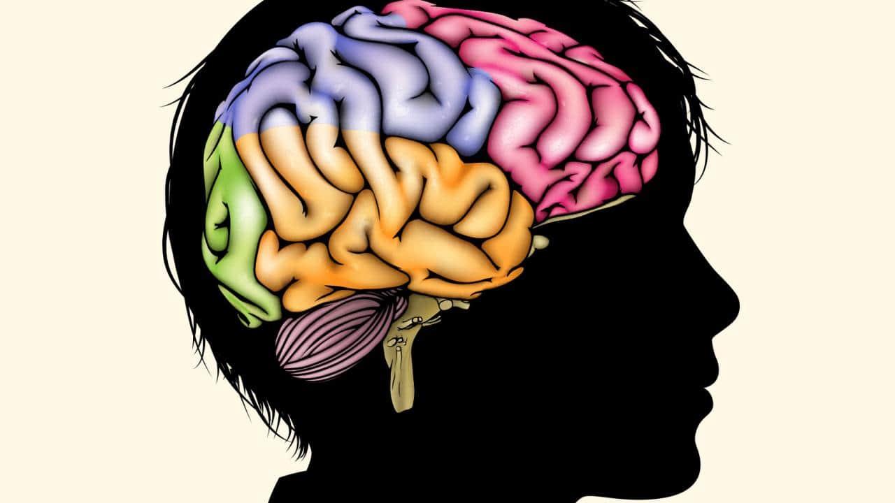 Развитие мозга – обзор Science