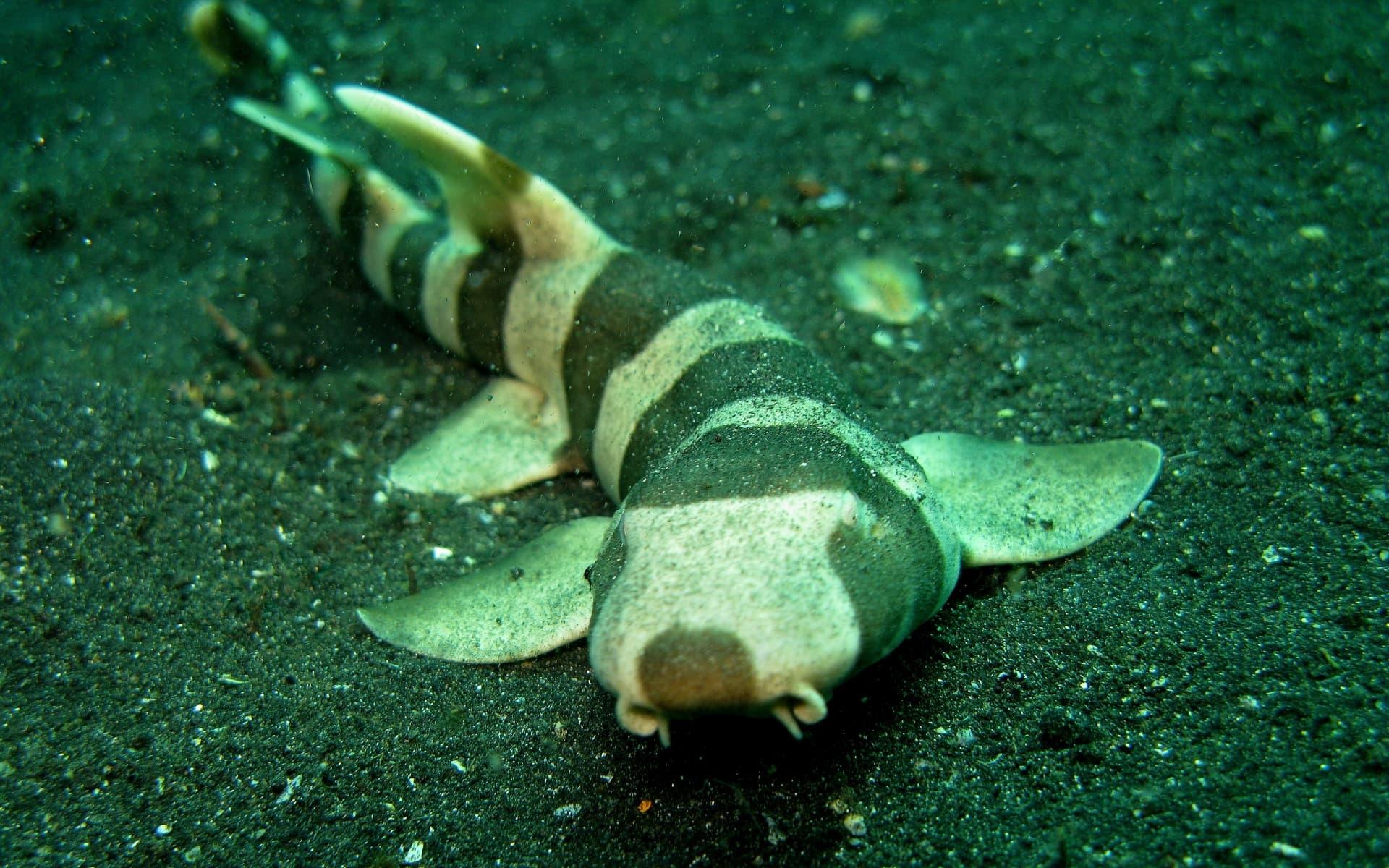Акулы частично потеряли зрение и нюх в процессе эволюции