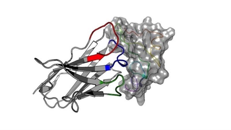 В организме альпака найдены антитела помогающие в борьбе с раком