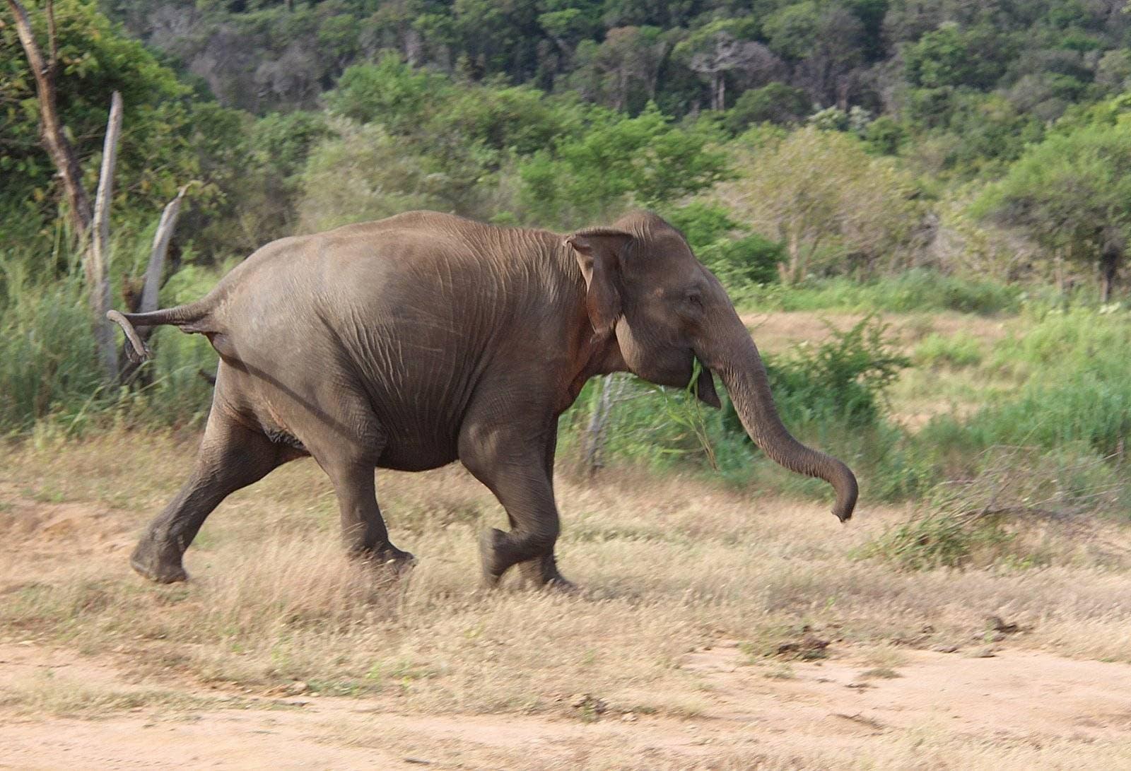 Ученые объяснили медлительность слона и тираннозавра
