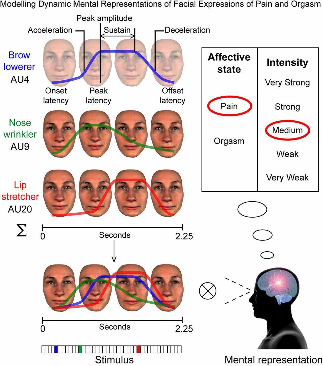 Культурные различия отразились на выражении лица при оргазме и боли