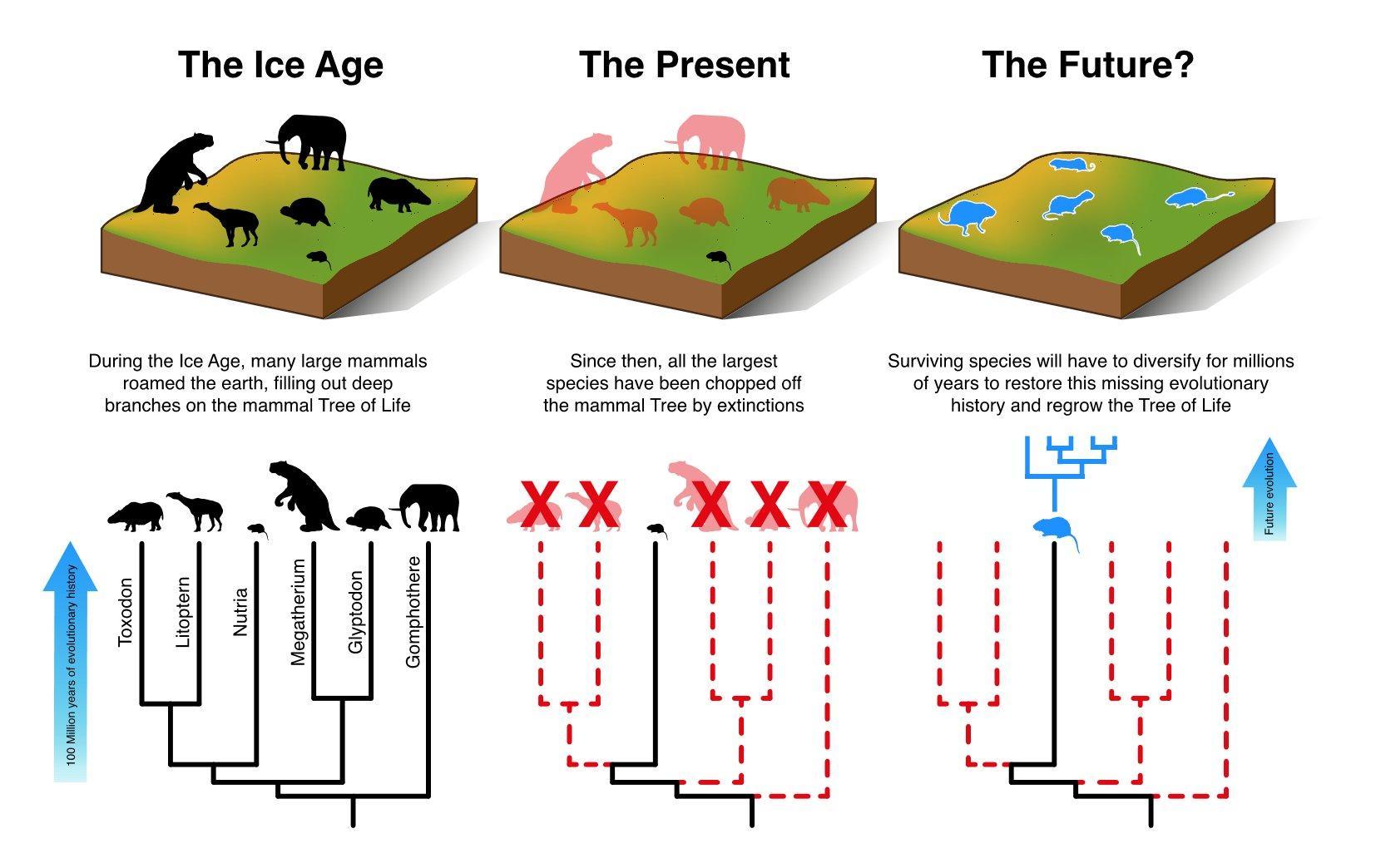 Млекопитающим понадобятся миллионы лет на восстановление после антропоценового вымирания