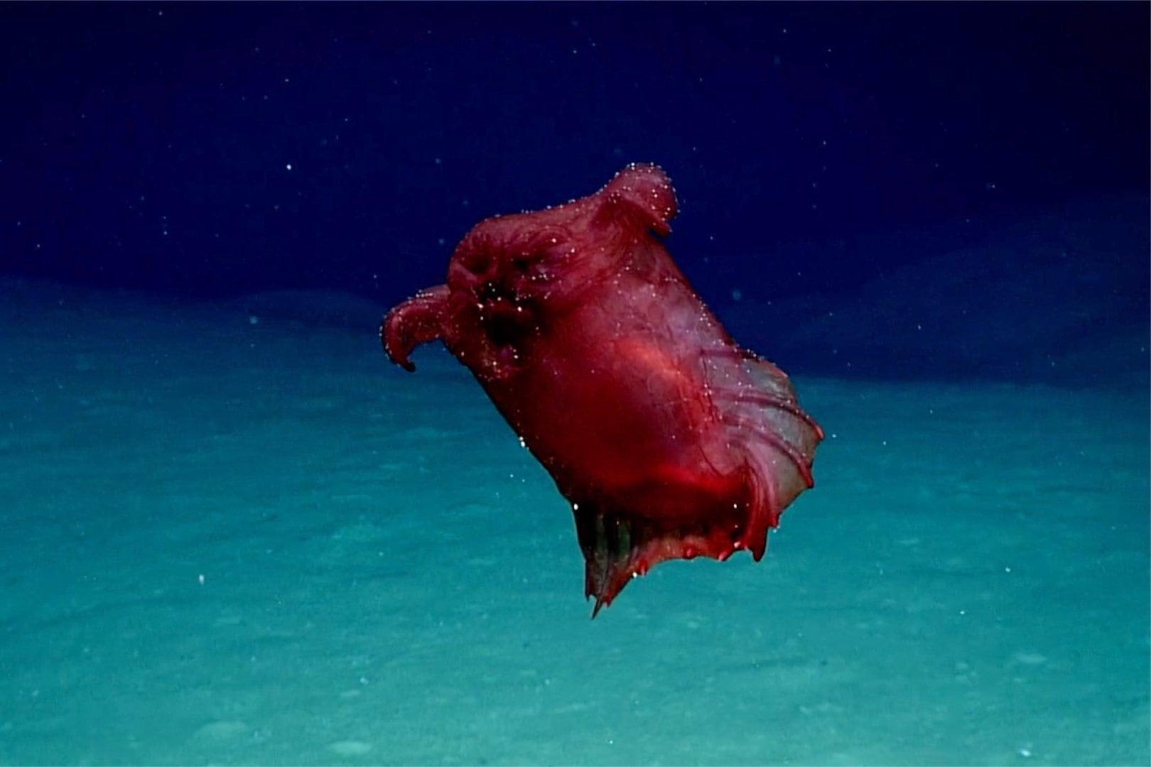 У берегов Антарктиды засняли «безголового куриного монстра»