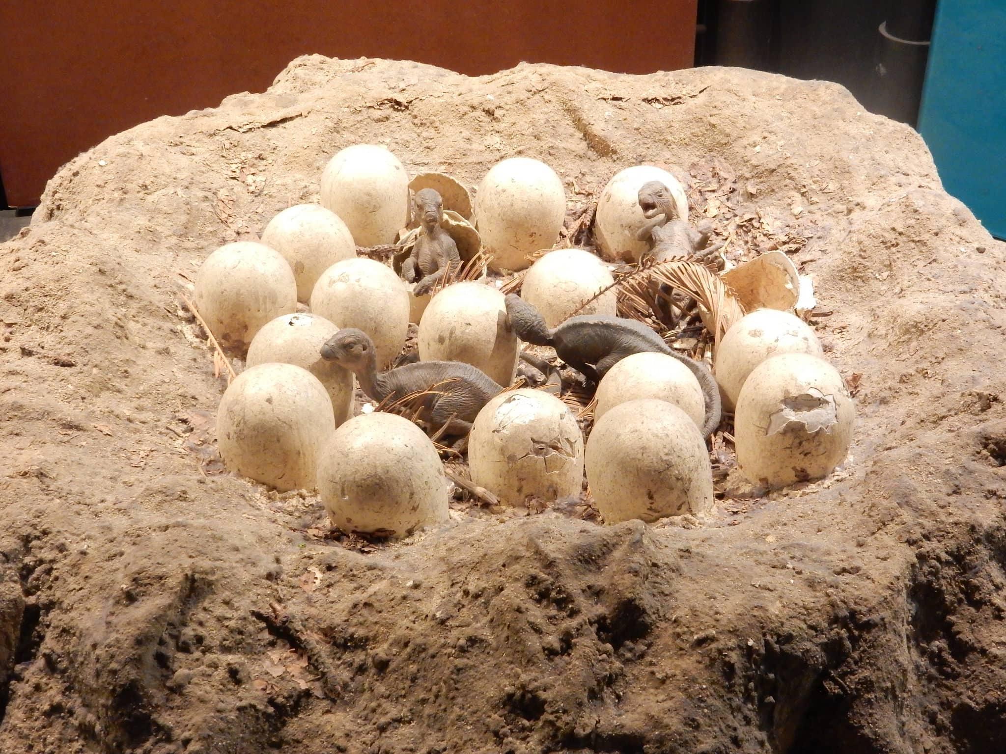 Птицы унаследовали цветные яйца от динозавров