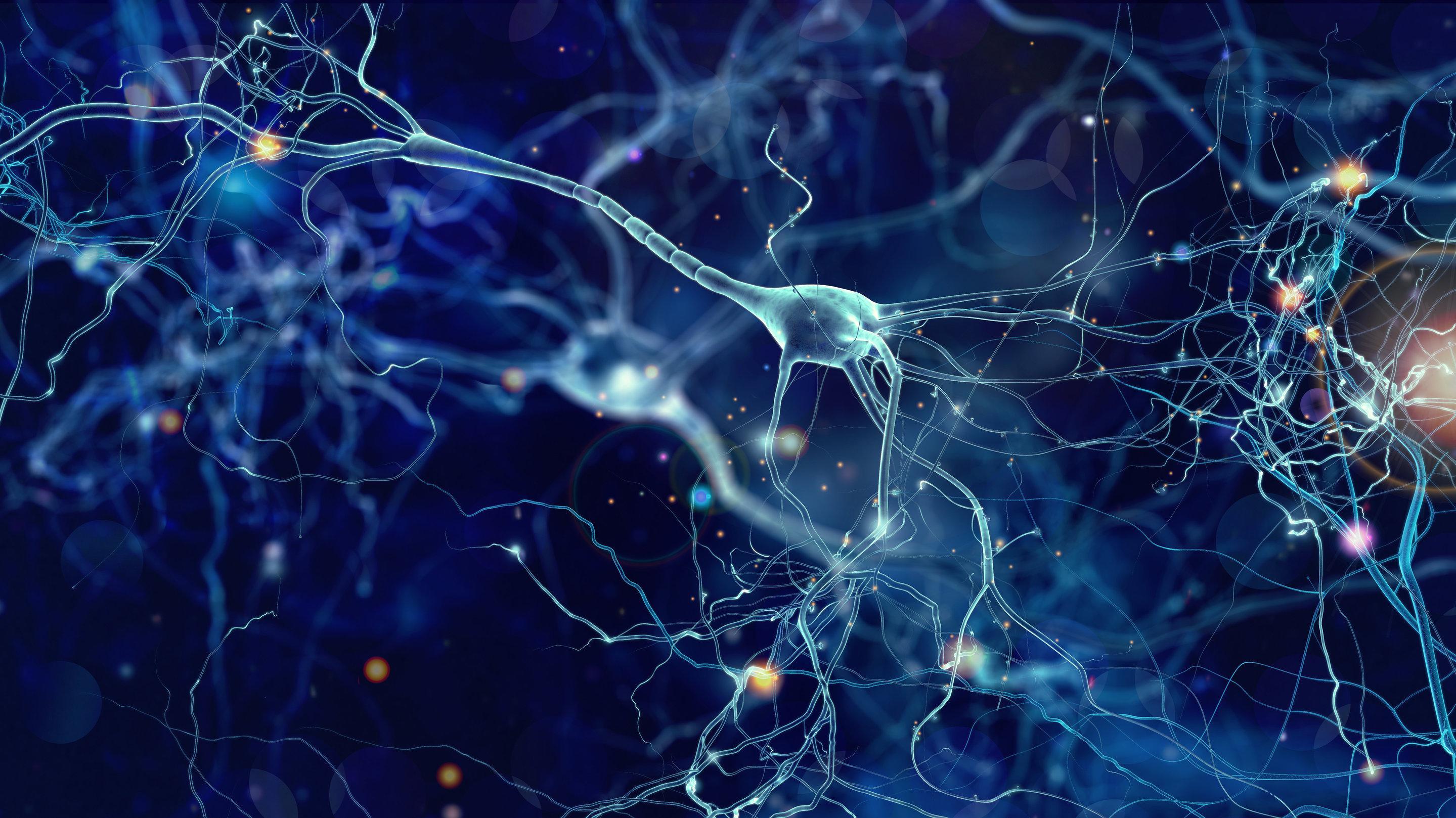 Мозг из пробирки по электрическим свойствам оказался похож на мозг младенца