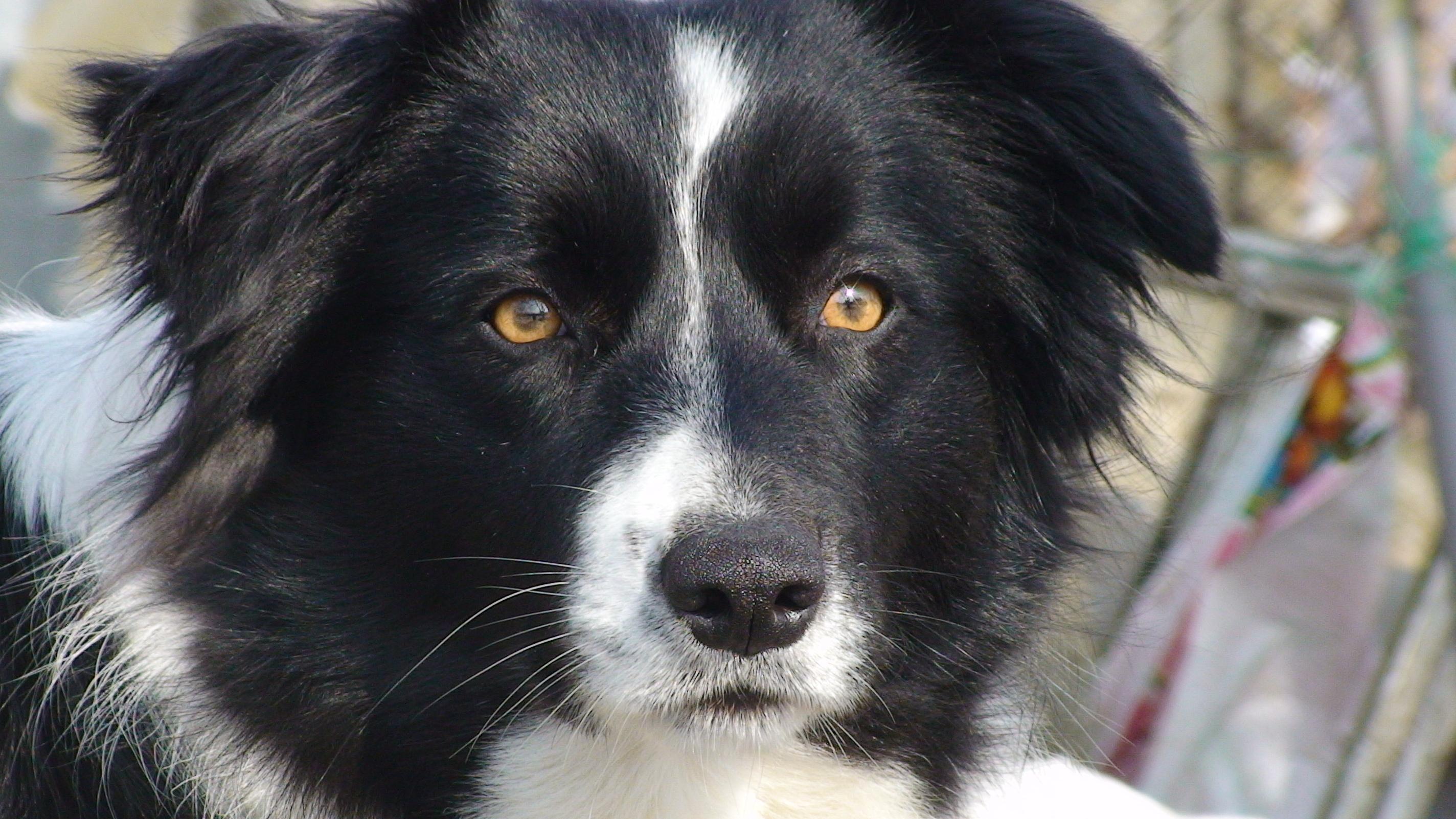 Собаки обладают метасознанием
