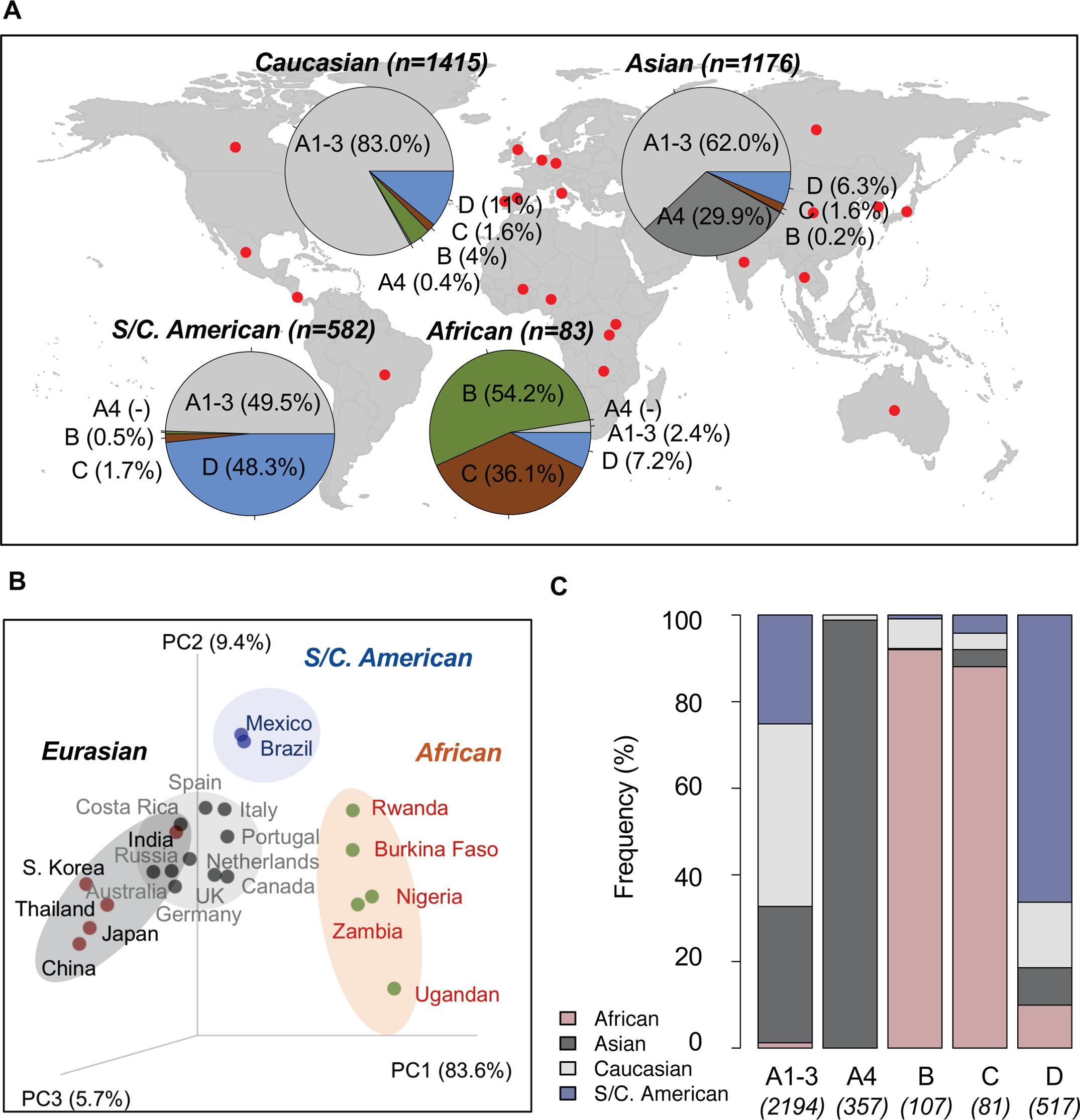 Неандертальцев обвинили в передаче вируса папилломы европейцам