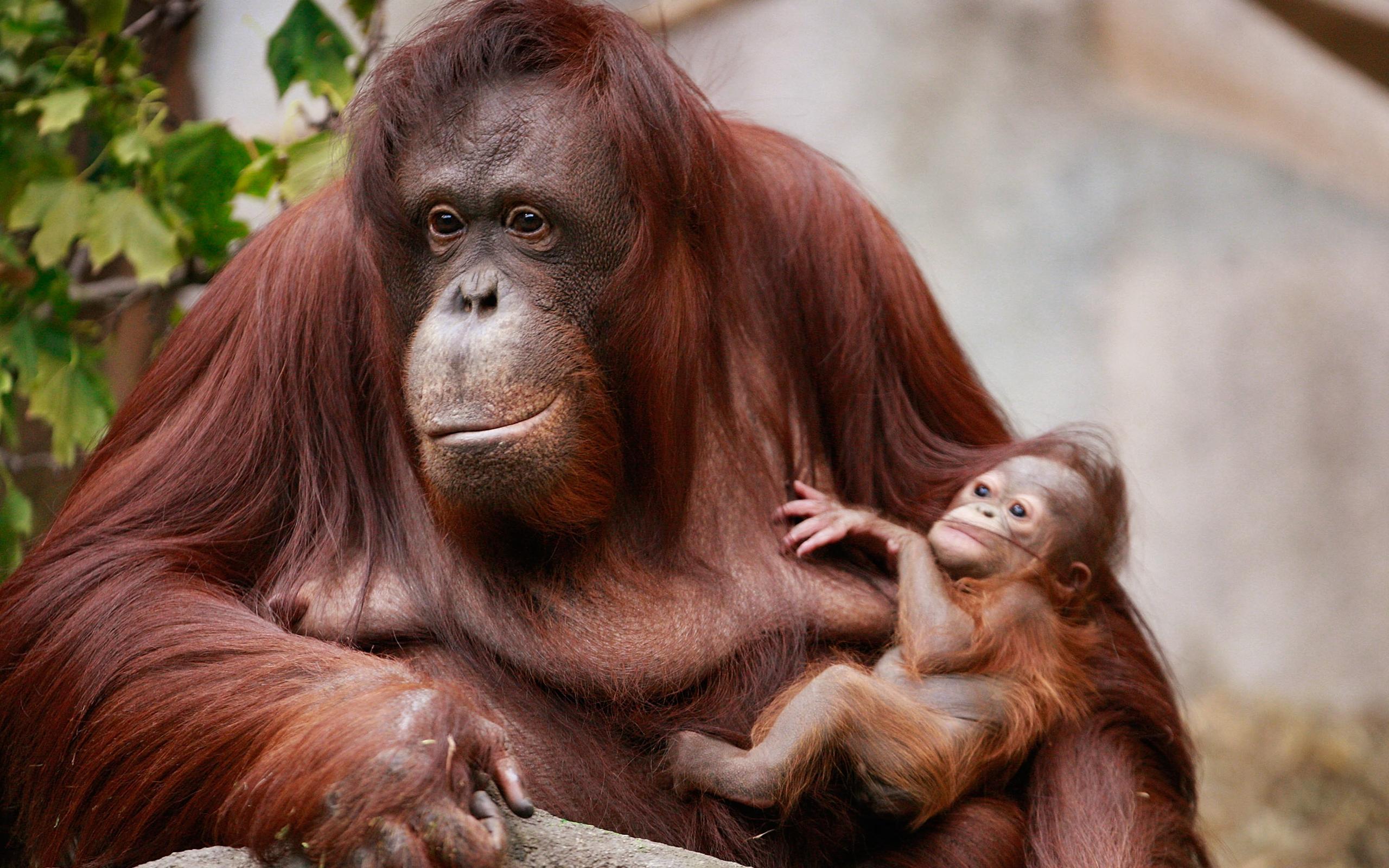 Орангутаны рассказали детям о прошедших событиях