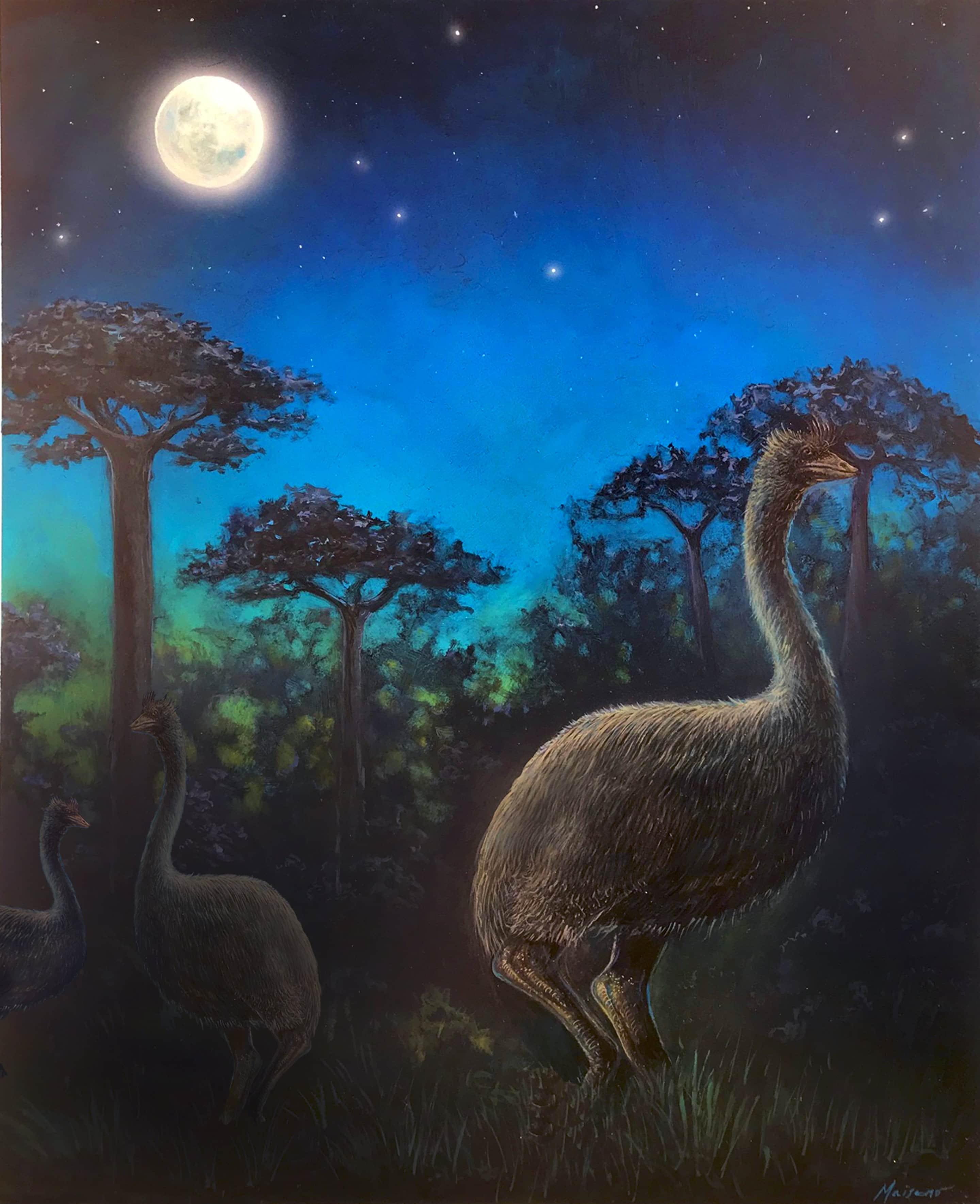 Крупнейшие из когда-либо живших птиц оказались почти слепыми