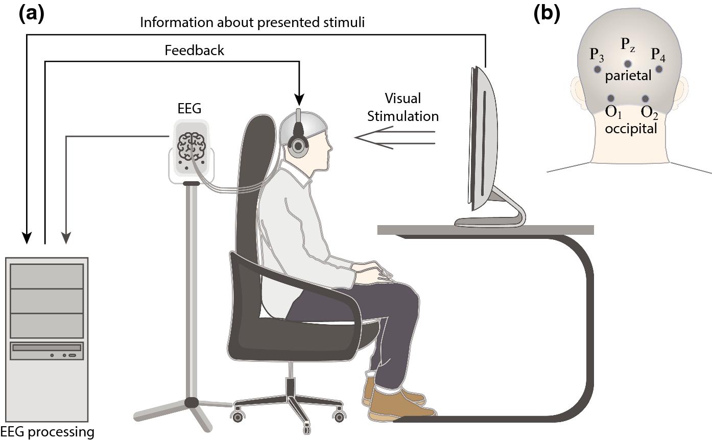Высокую концентрацию внимания поддержали, показывая человеку реакции его мозга