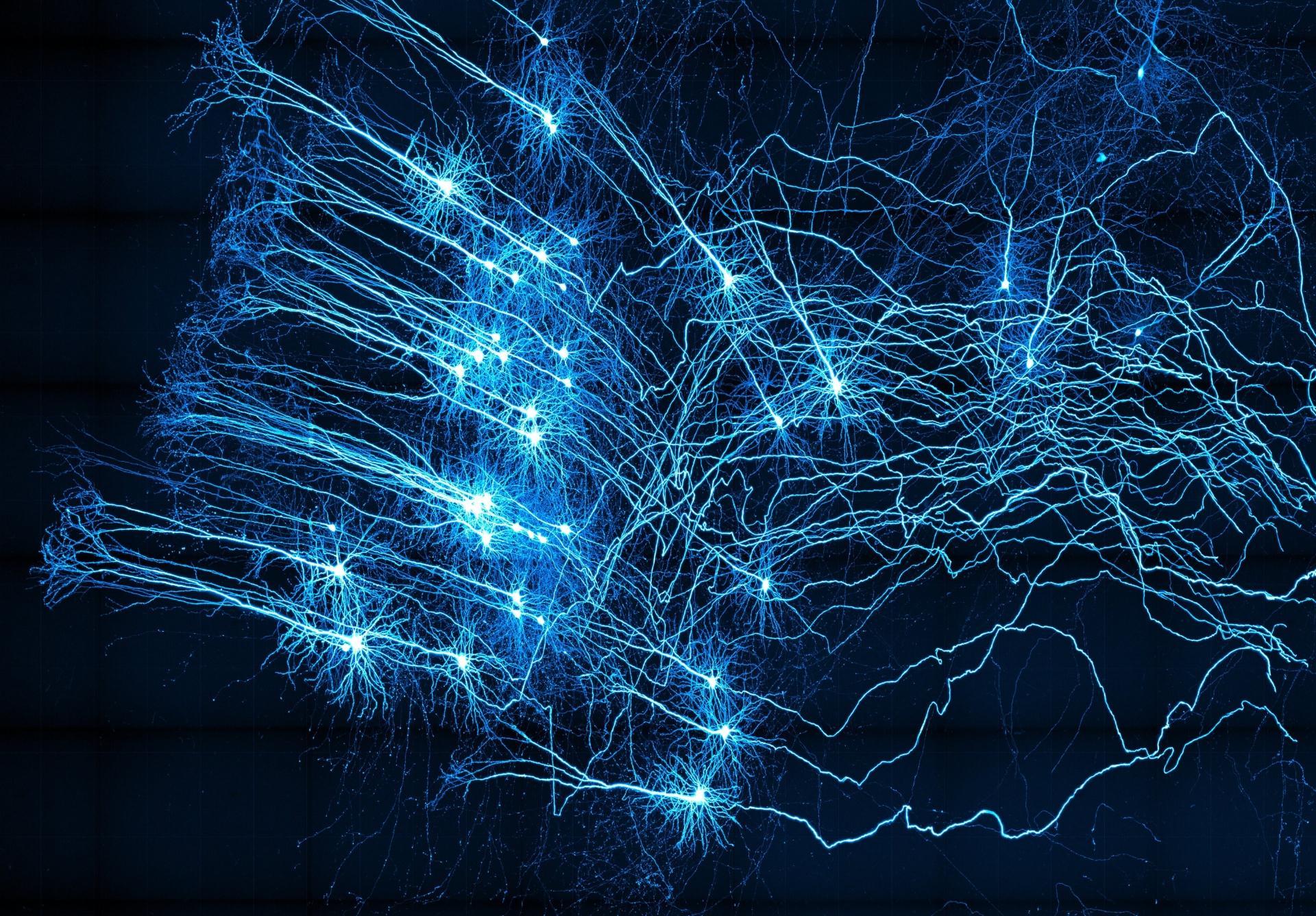 Карта работы генов клеток мозга и новые нейроны