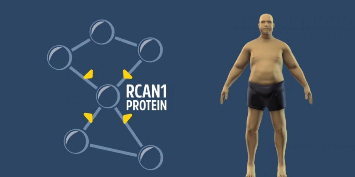 Отключение одного гена решает проблему ожирения?