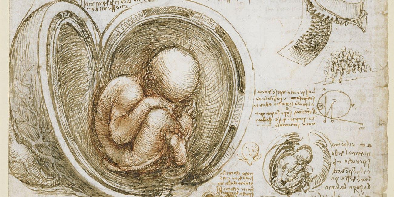 Матка мертвой женщины впервые помогла родить ребенка