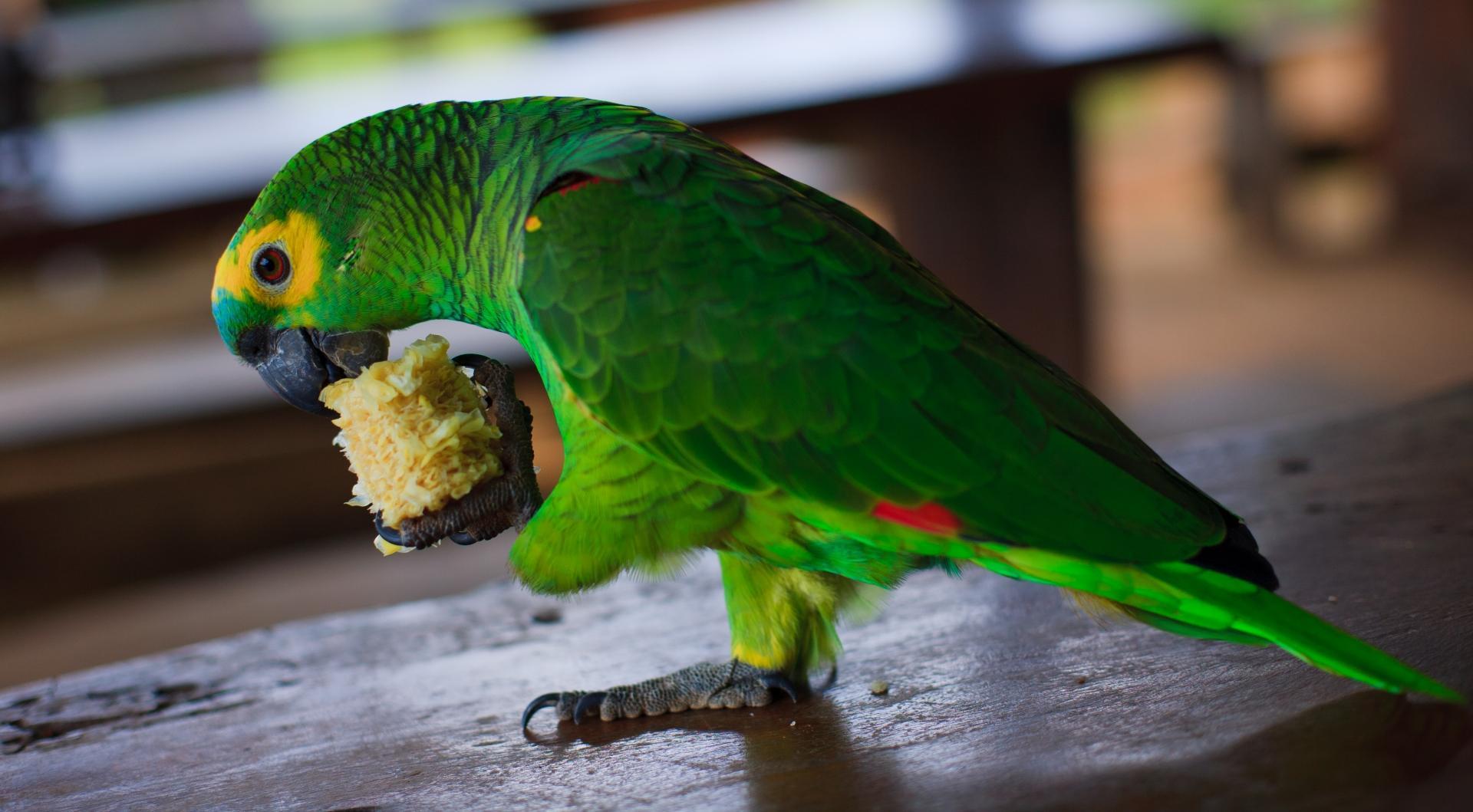 Генетики связали долгожительство попугаев с изменениями в геноме