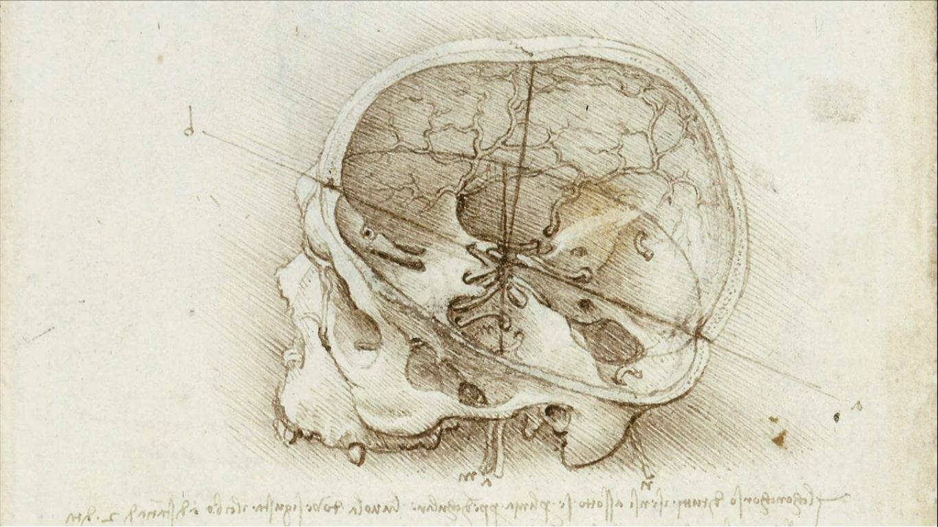 Фиброиновая конструкция поможет мозгу восстанавливаться от травм