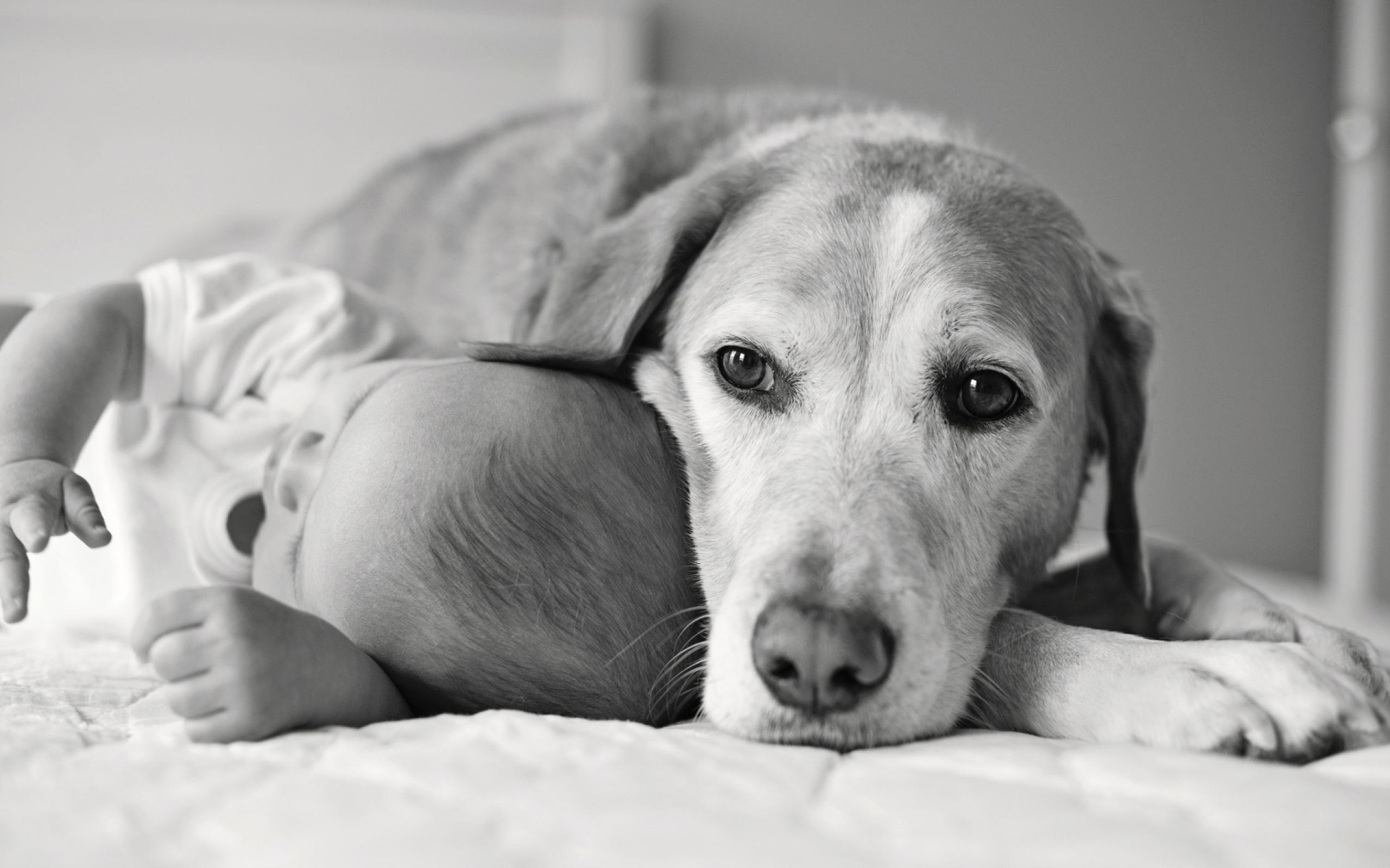 Большое количество собак и кошек в детстве снизило риск развития аллергии