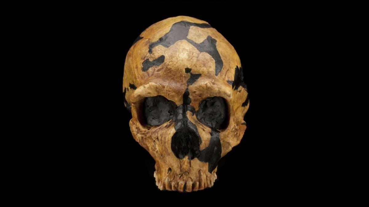 С неандертальцев сняли клеймо «жестоких головорезов»