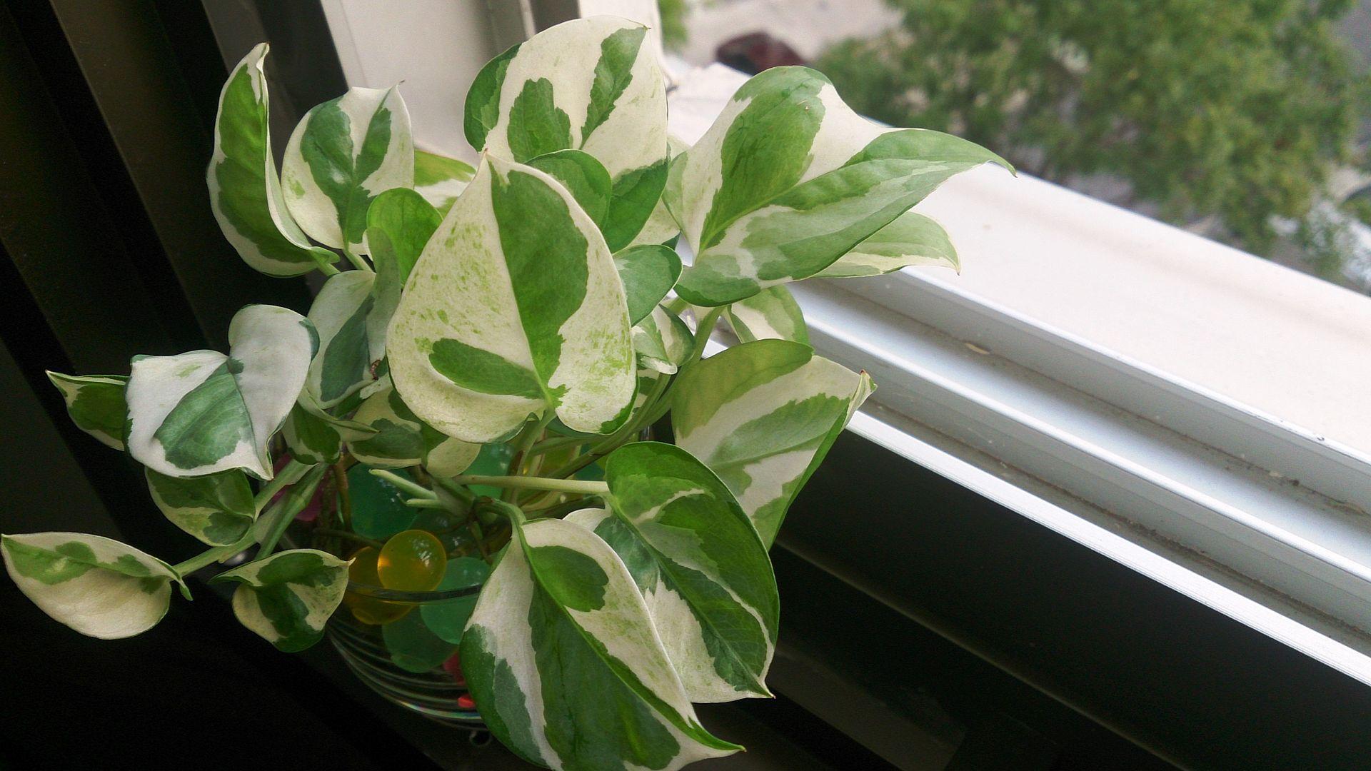 Звериный ген поможет растениям очищать воздух