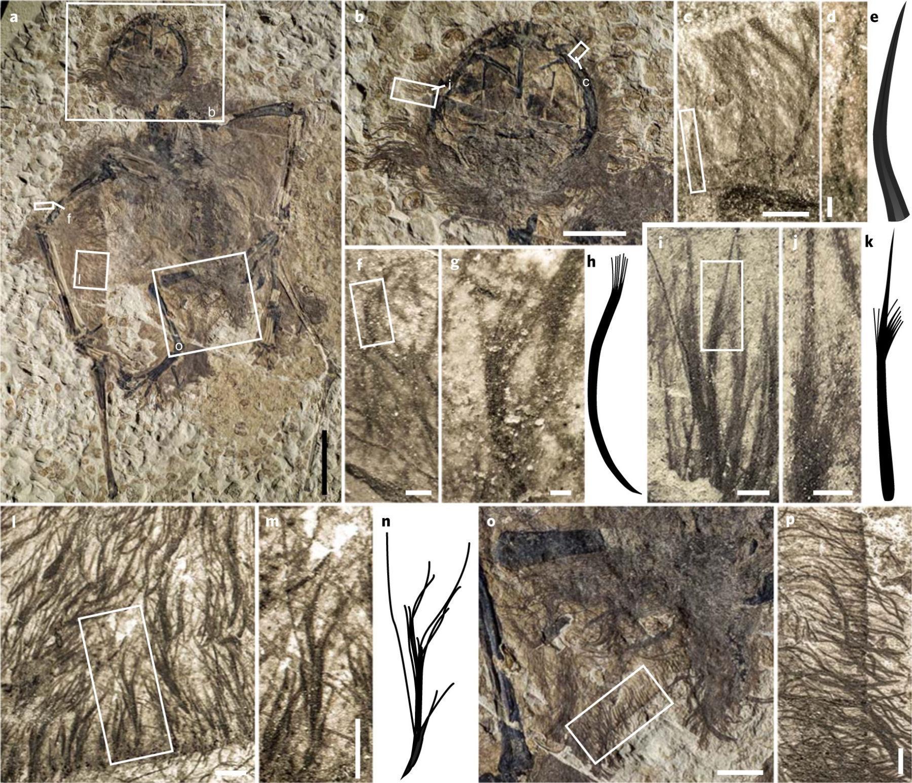 У птерозавров были перья