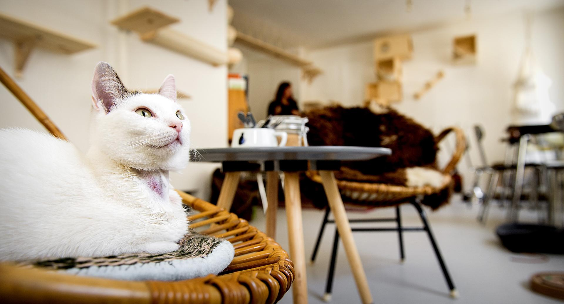 Котики и Дума: владельцы котокафе рассказали депутатам о рисках, которые несет для них новый закон
