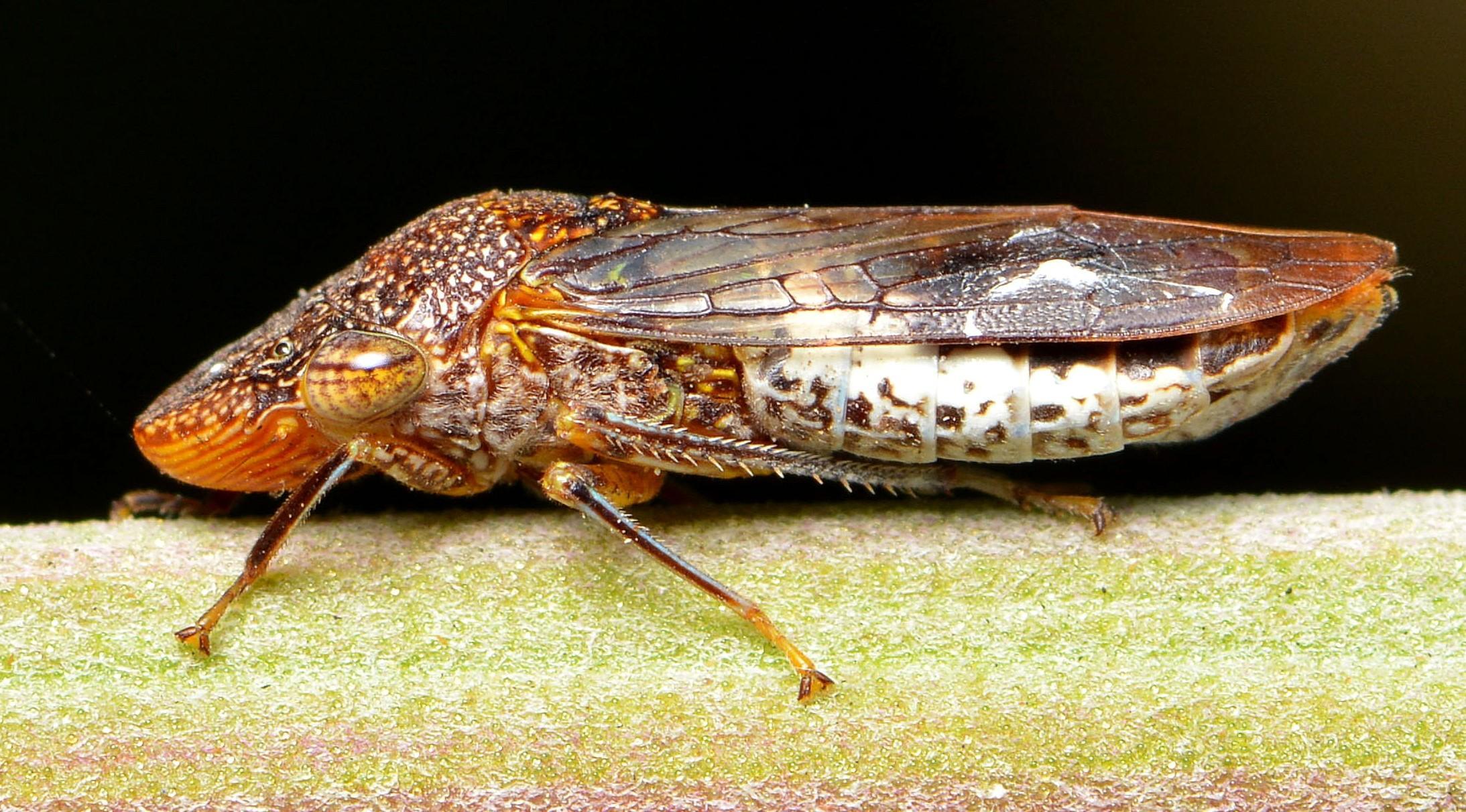 Справлять нужду быстрее молнии и другие сверхспособности насекомых