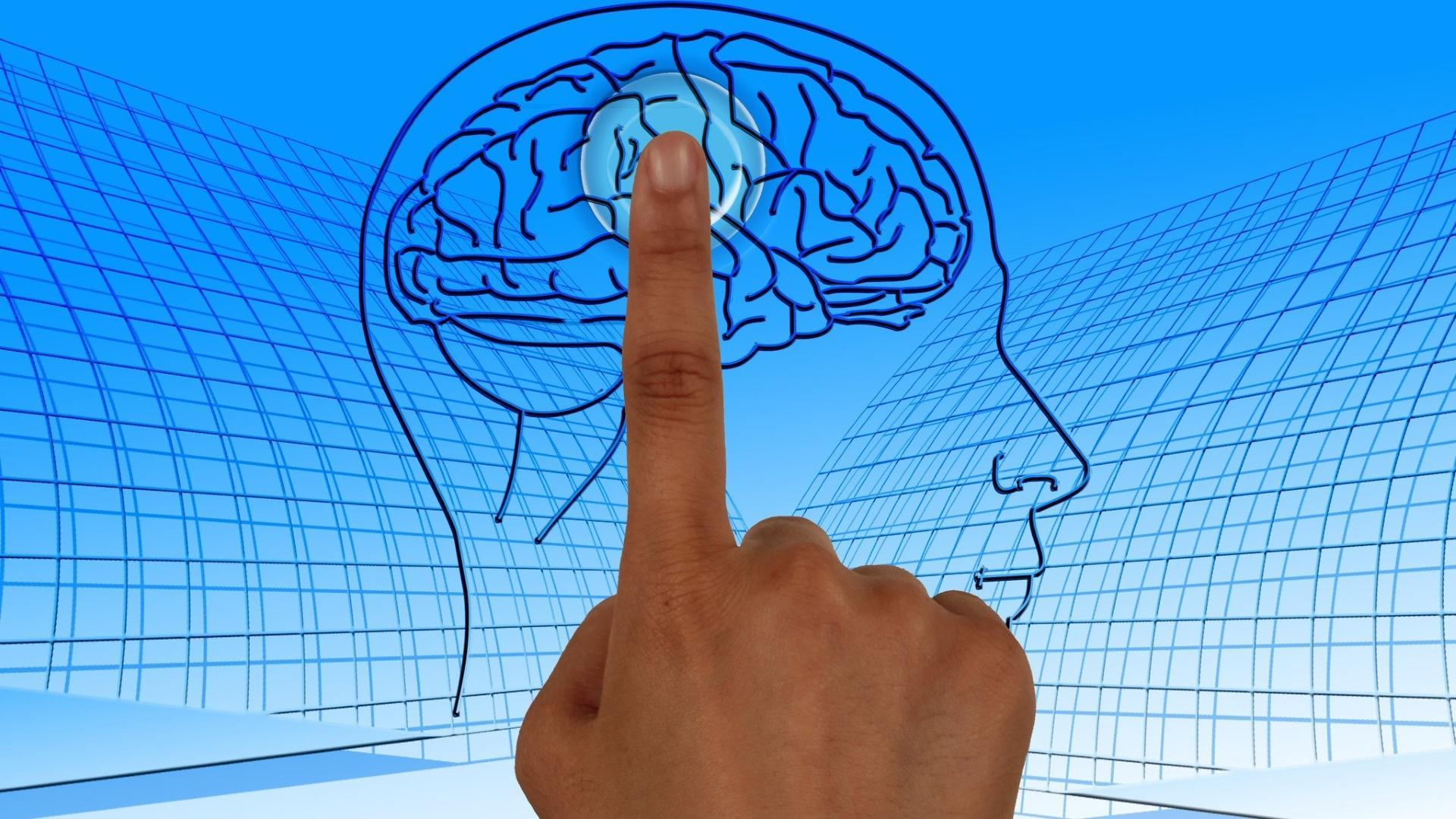 Учёные нашли «тайник памяти» в мозге