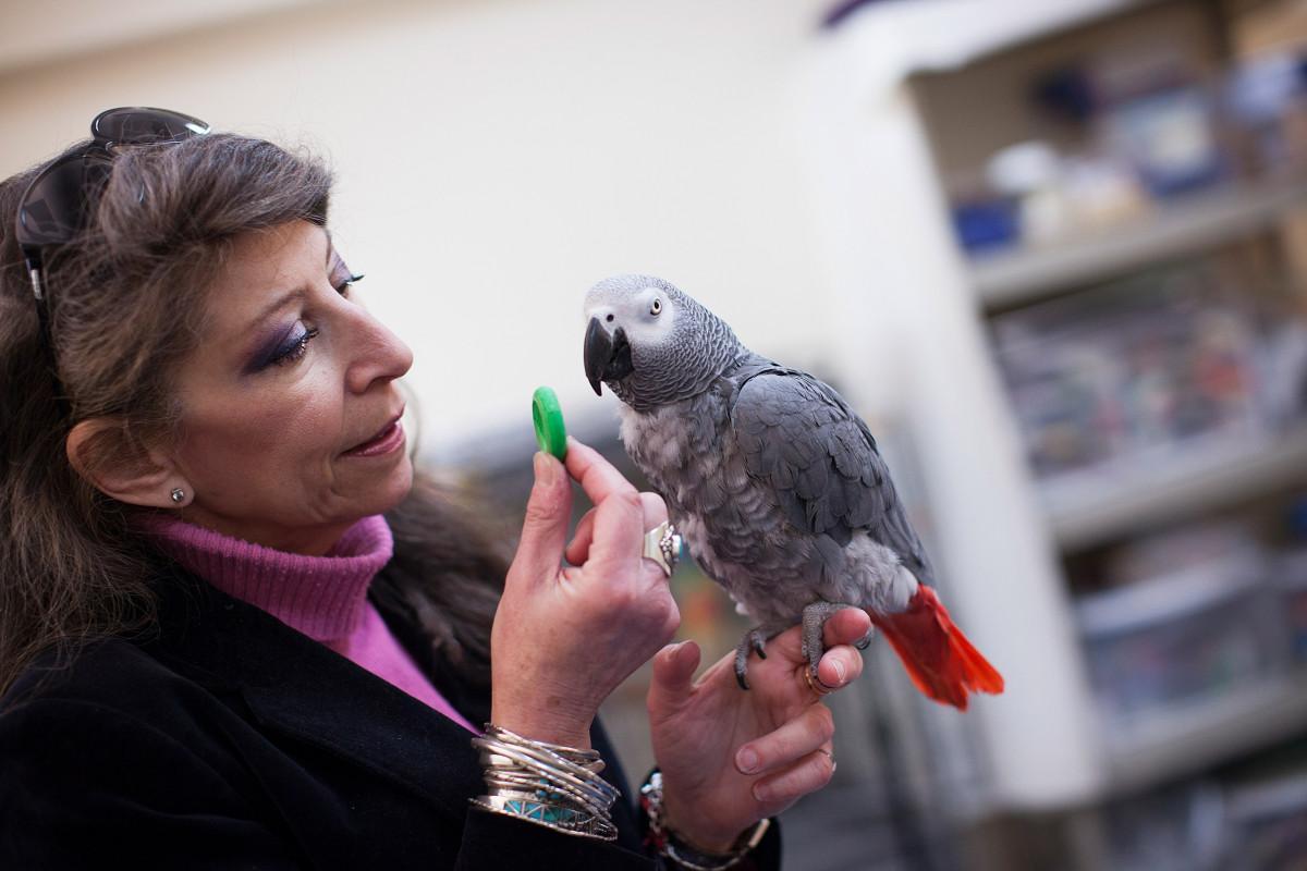 В тесте на логику попугай обошёл пятилетних детей