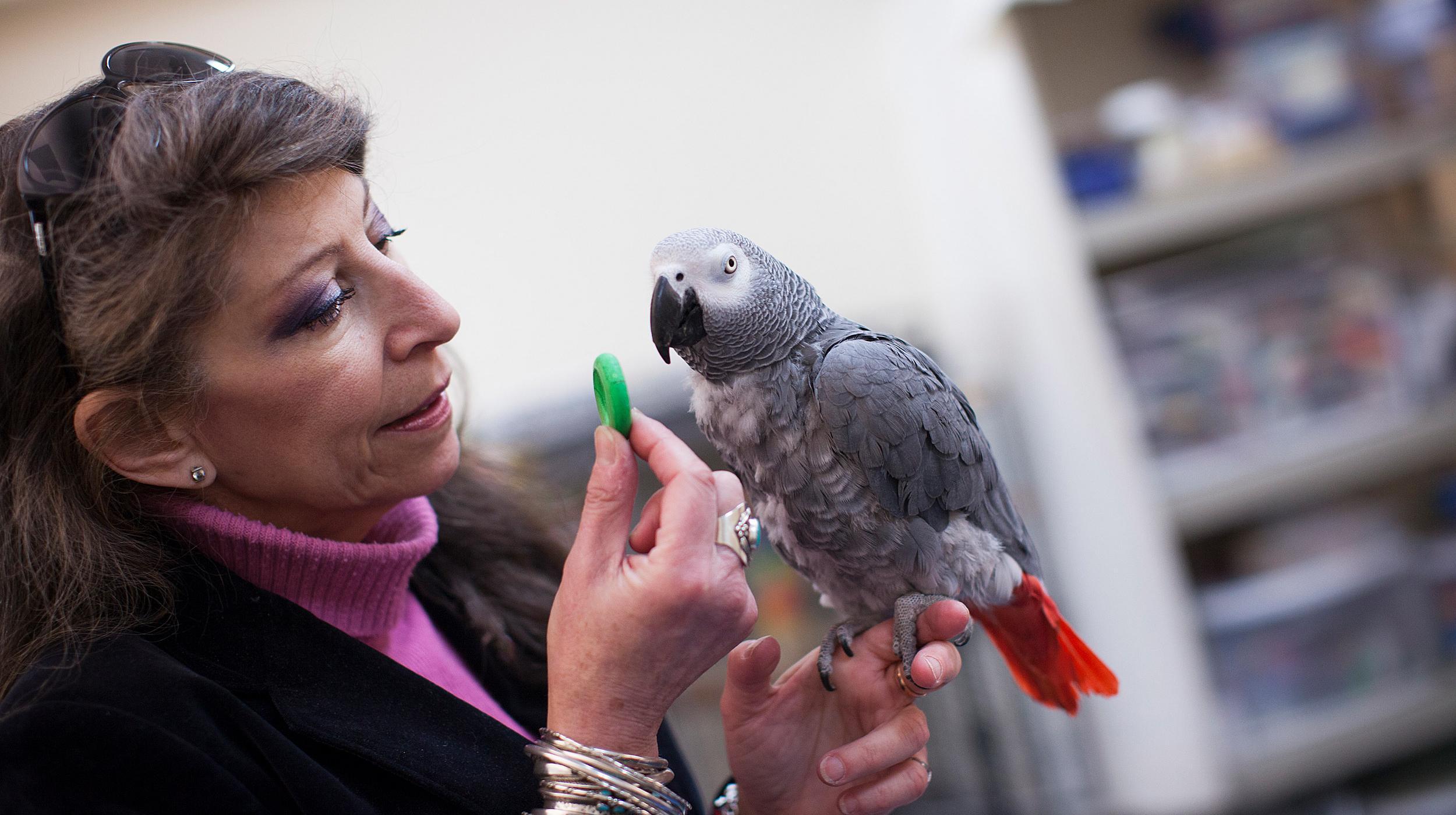 Попугай обыграл студентов Гарварда в игре в наперстки