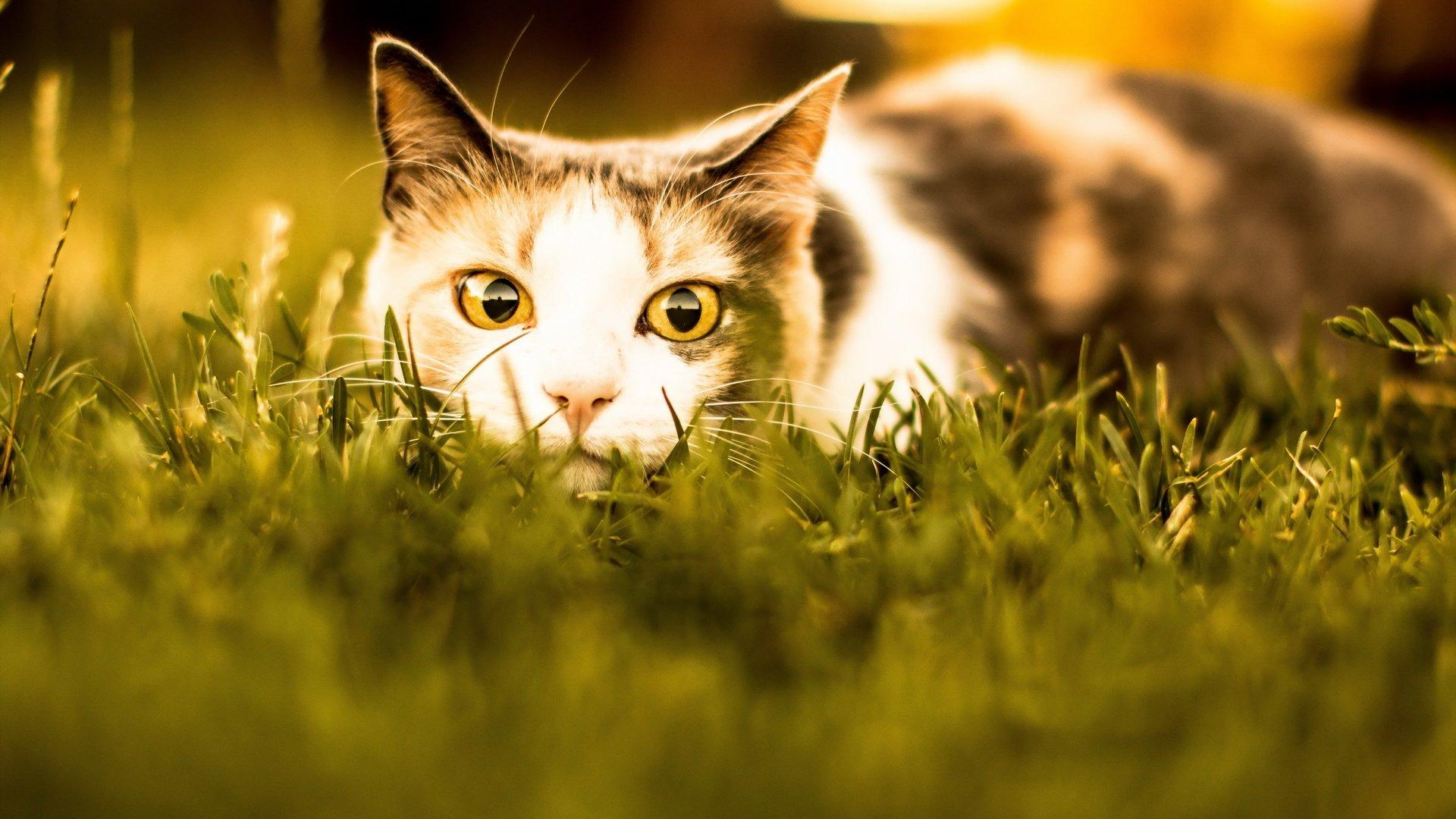 Действительно ли кошачьи паразиты могут вызвать шизофрению у людей?