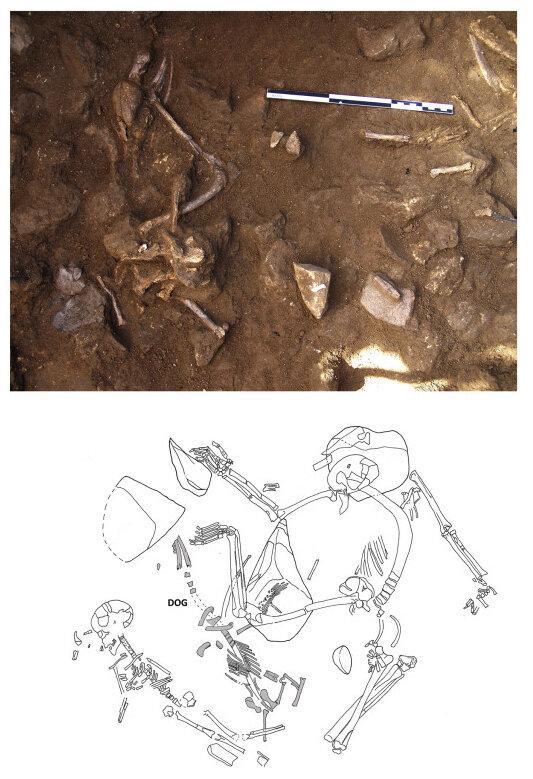 Археологи нашли подтверждение тесного соседства древних людей с собаками