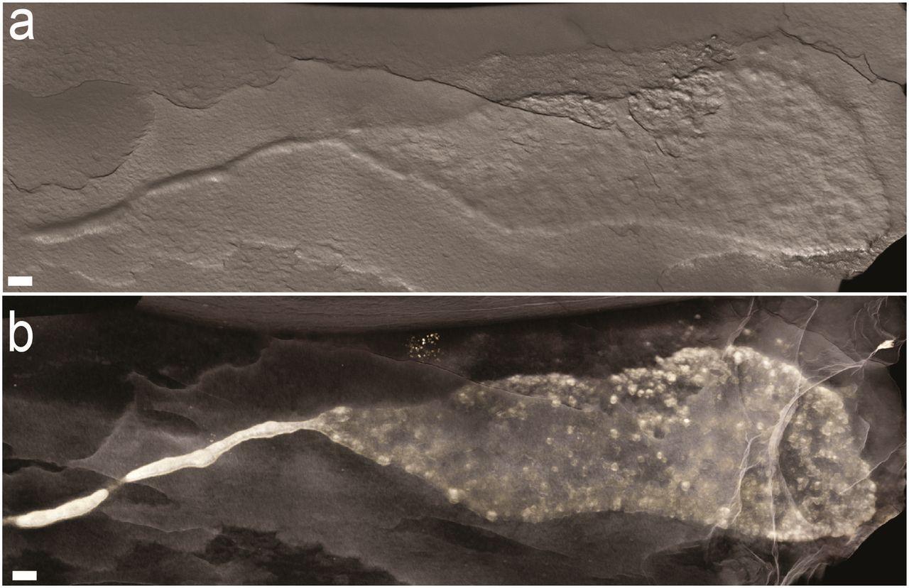 Многоклеточные организмы поползли два миллиарда лет назад