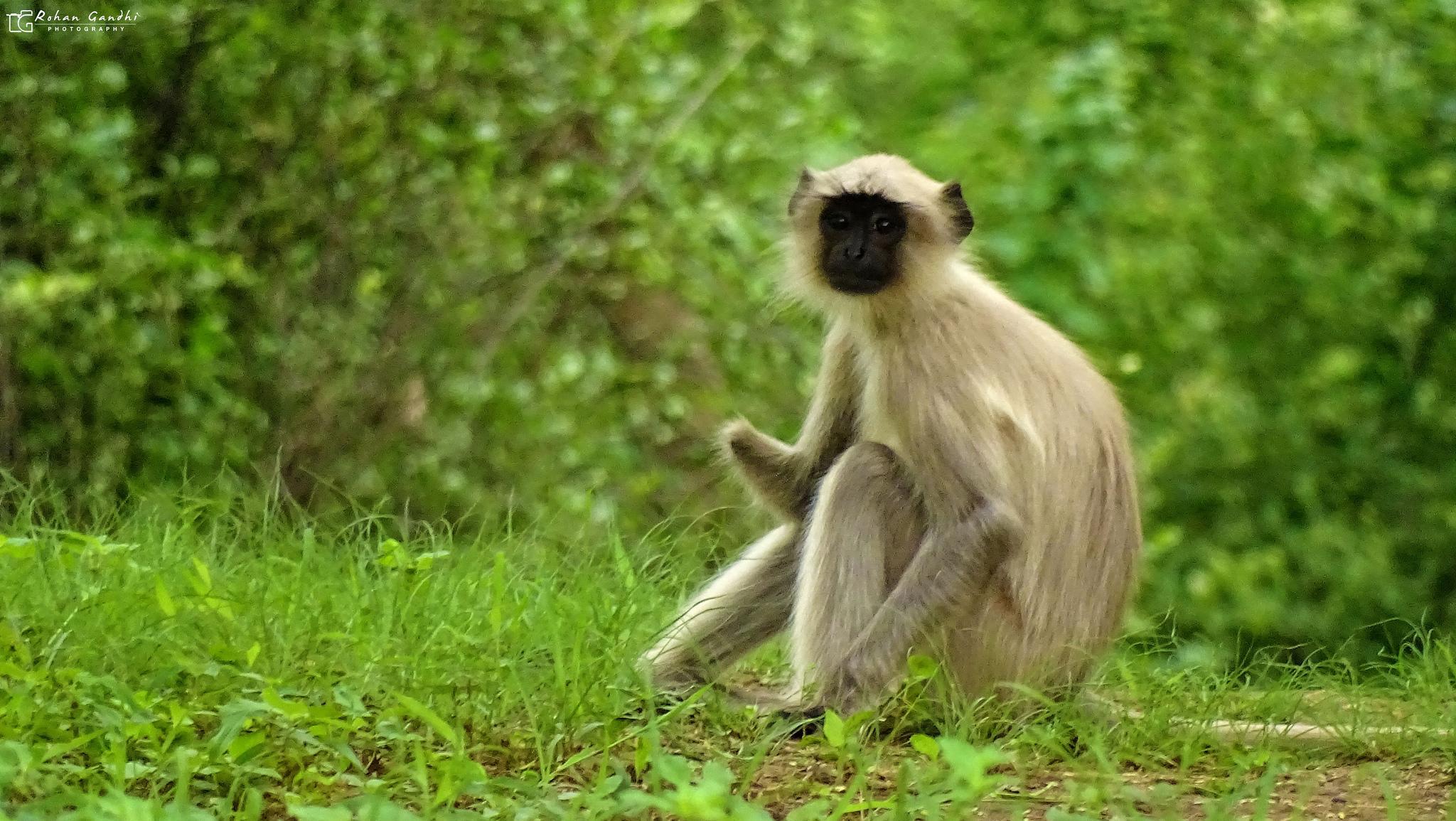 Древние люди ели обезьян