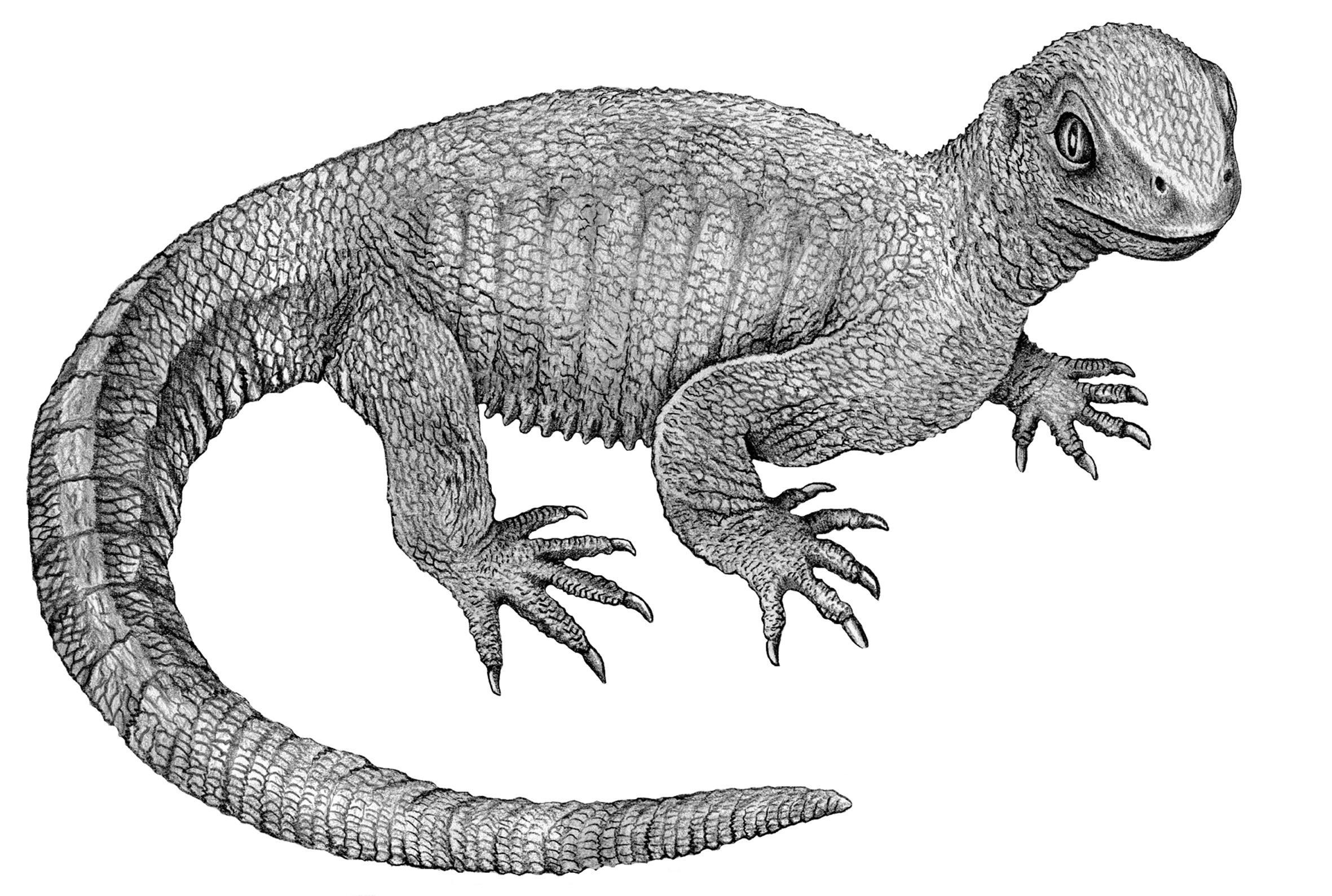 Палеонтологи описали остеосаркому у жившей 240 миллионов лет назад рептилии