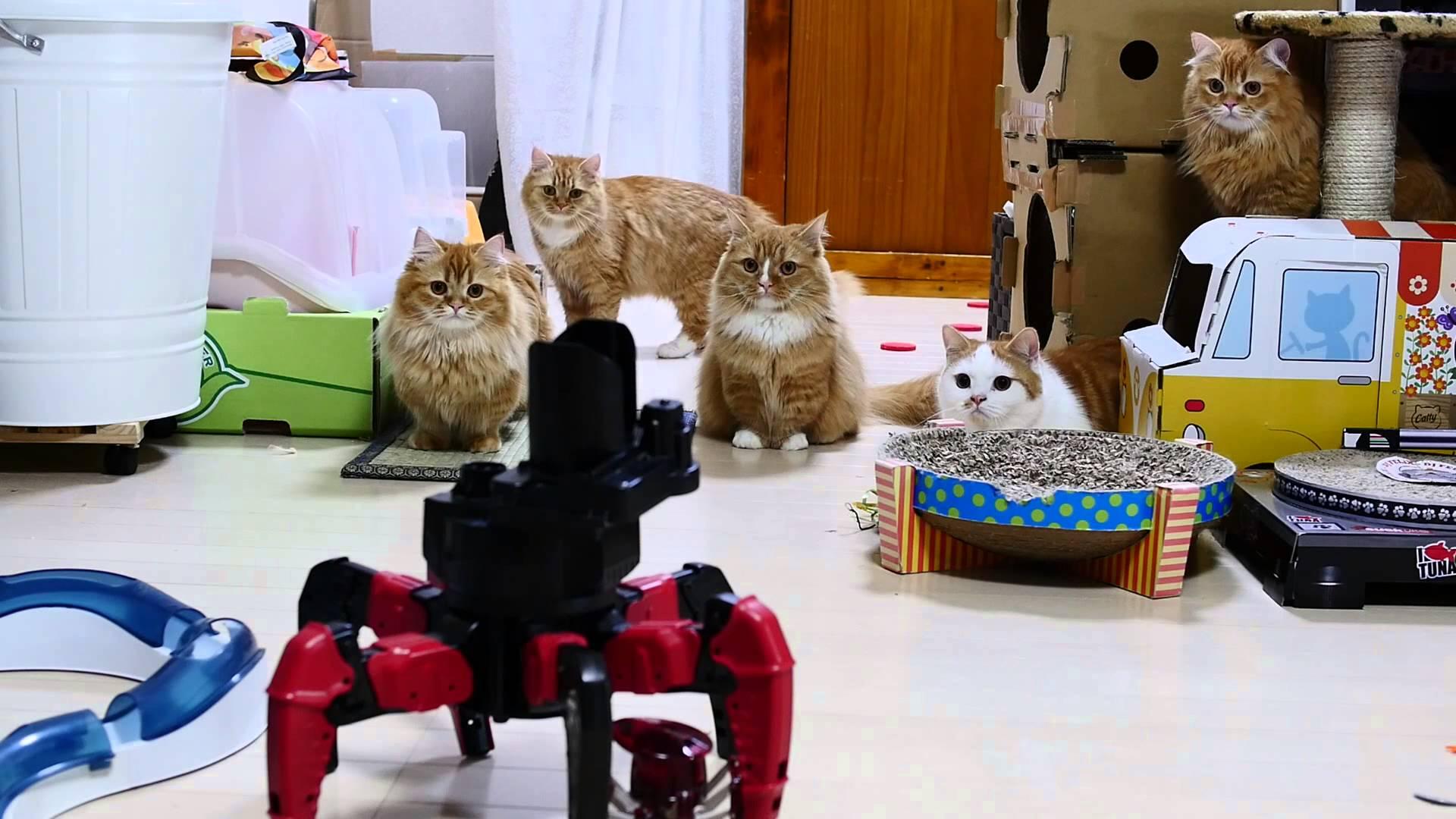 Котики против роботов