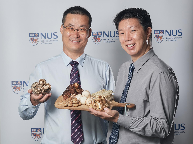 Грибы помогают сохранить когнитивные функции в пожилом возрасте