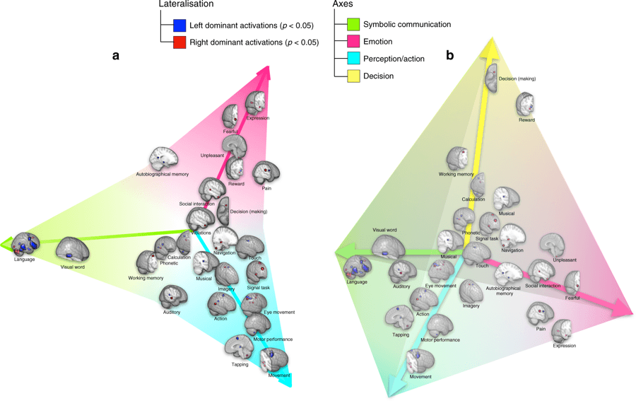 Ученые составили карту функциональной латерализации мозга человека