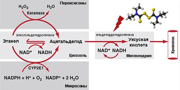 Научная подводка к антибиотикам под водку