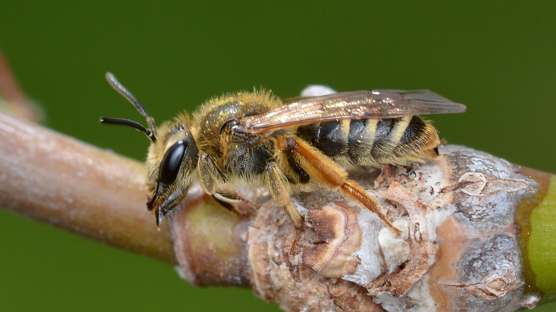 Инсектагеддон откладывается — учёные отмечают недостатки алармистских исследований