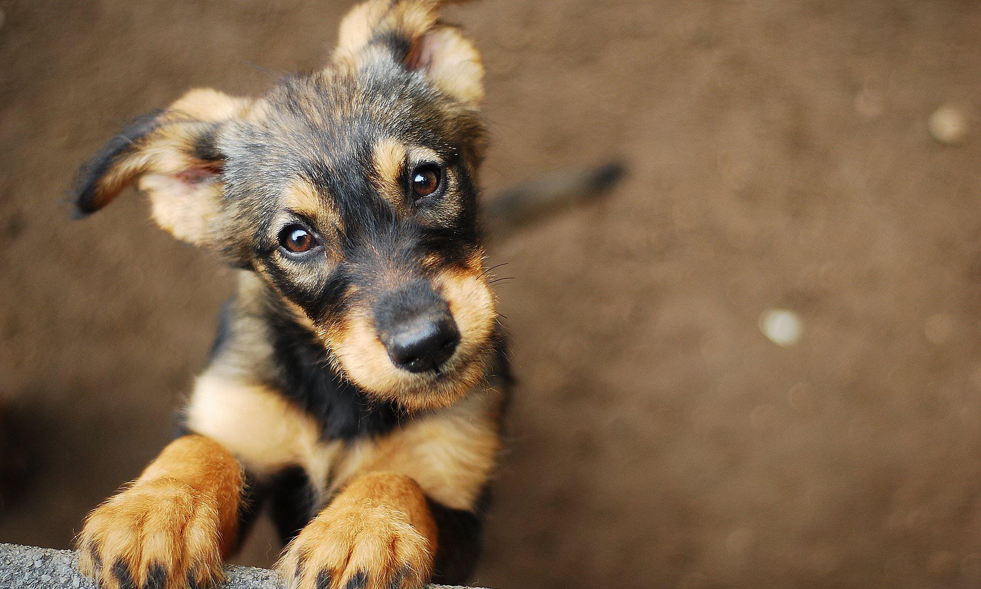 Собаки учуяли эпилептический припадок у человека