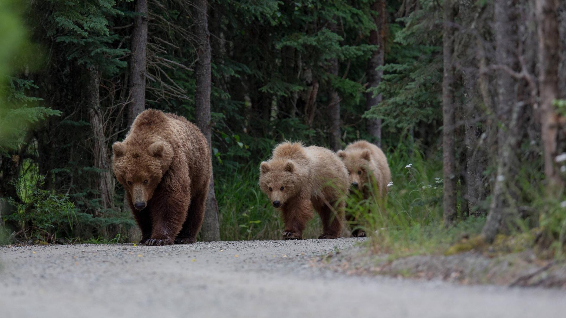 Деятельность человека ограничила передвижение млекопитающих в глобальном масштабе
