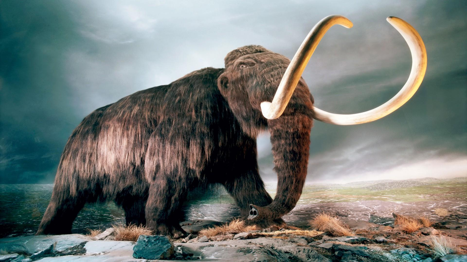 Миллионолетняя ДНК рассказала об эволюции мамонтов